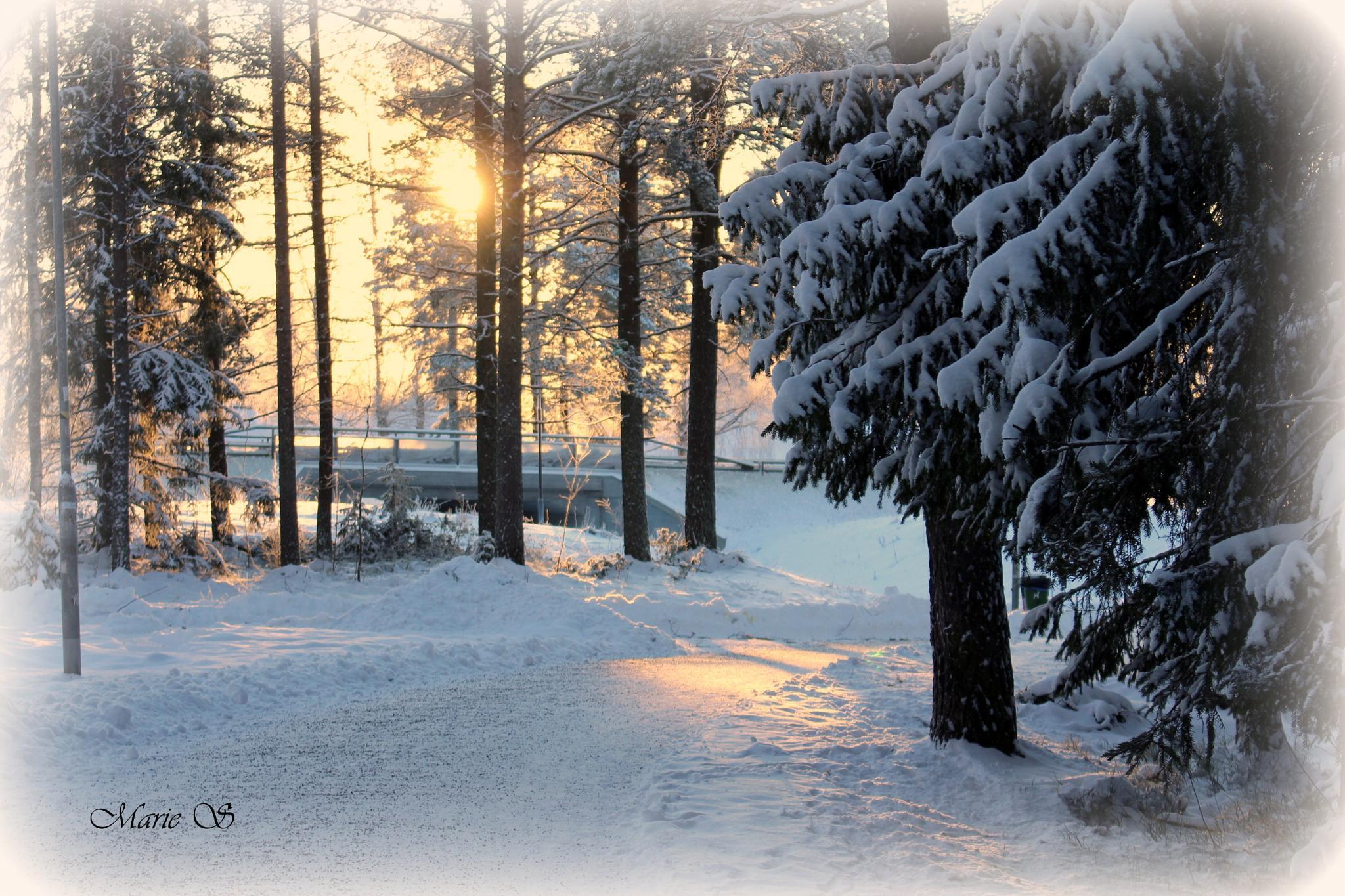 Winter by Marie Stjärnborg