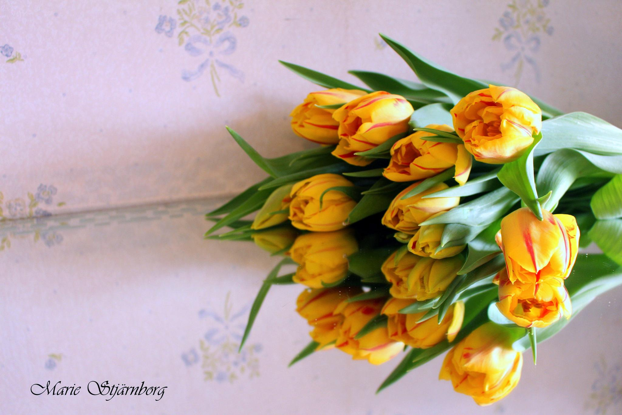 tulips by Marie Stjärnborg