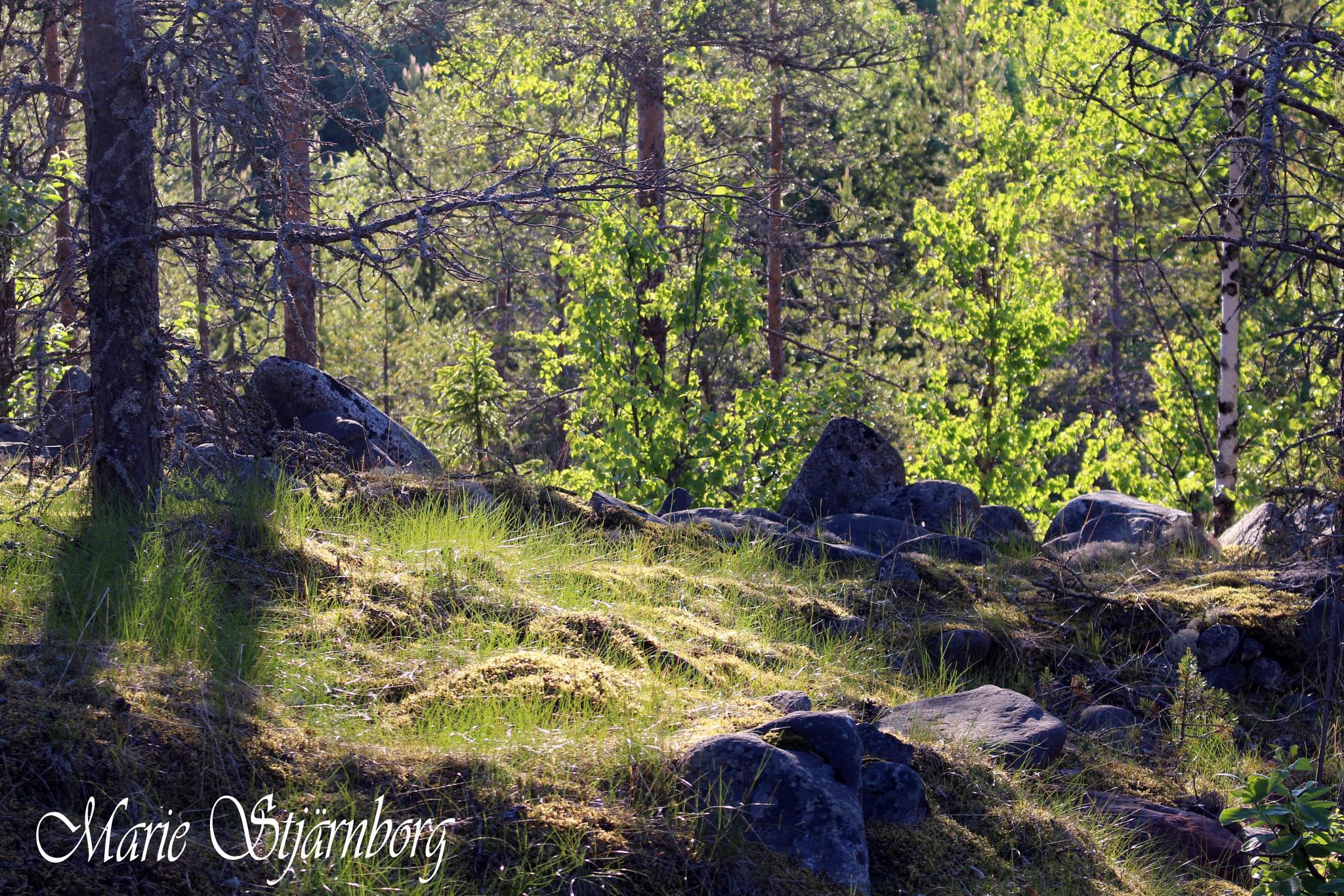Swedish summer by Marie Stjärnborg