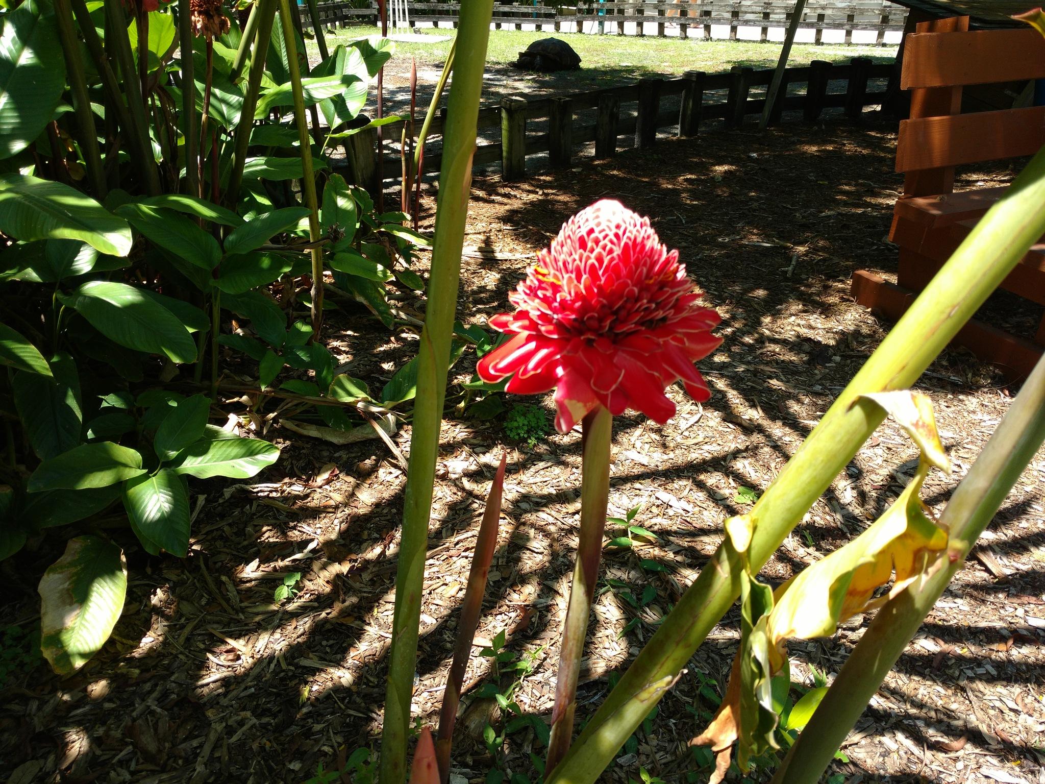 Unique Bloom. by mellingerlj