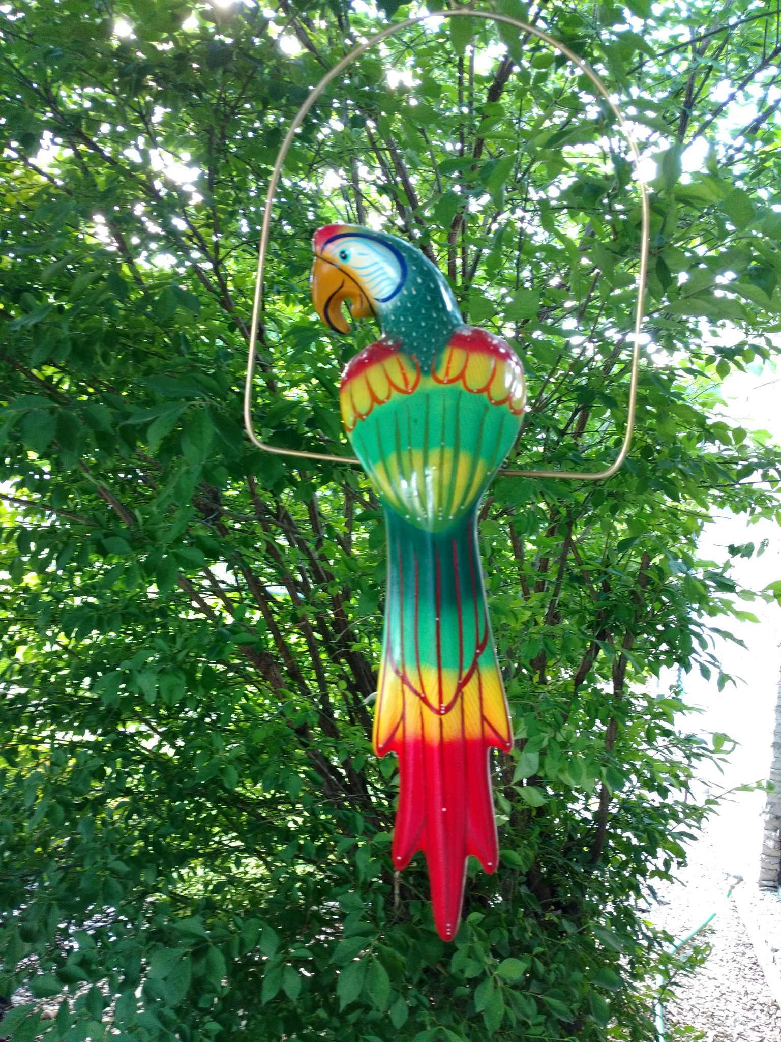 Colorful Parrot by mellingerlj