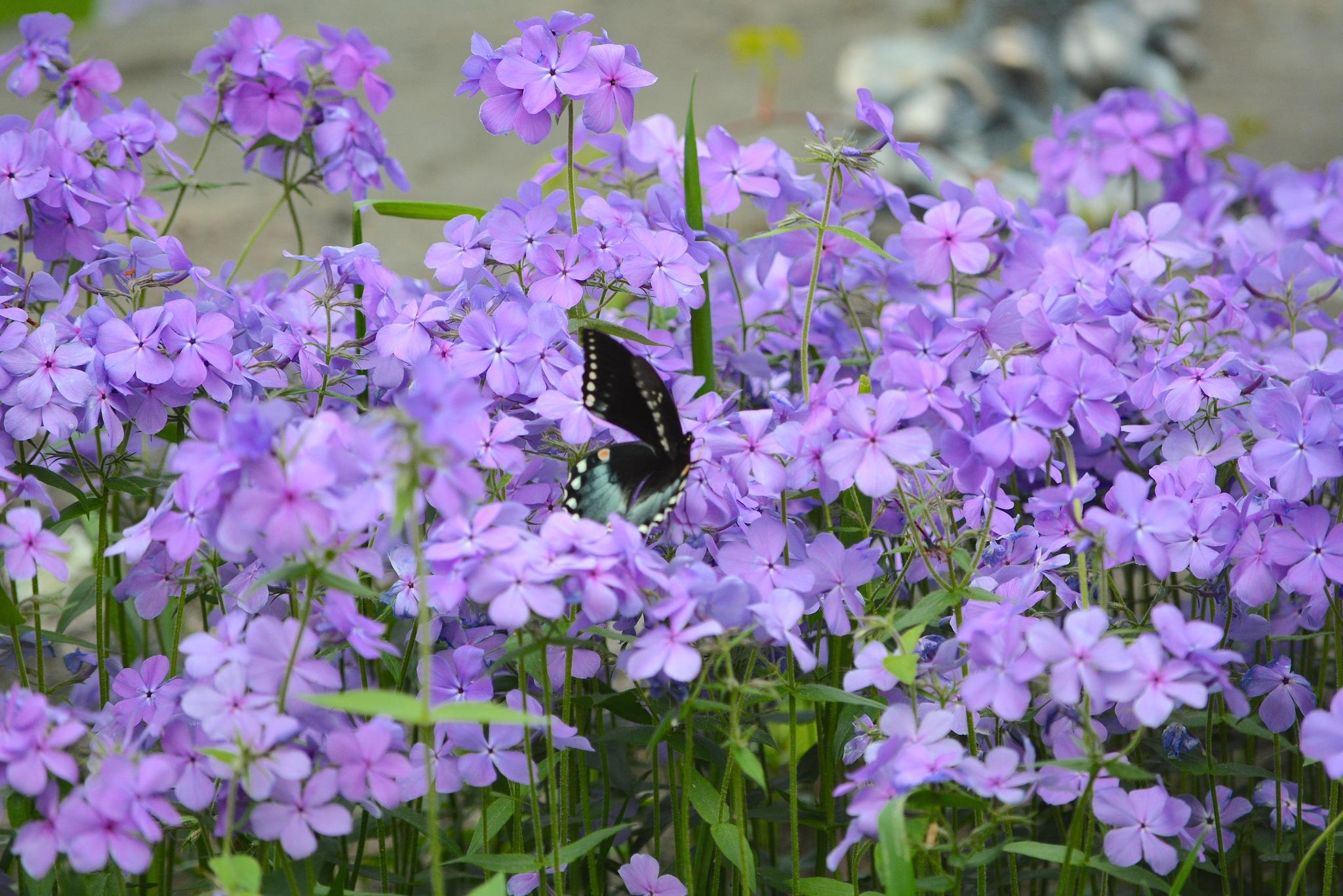 Beauty in the Garden by suzanne.kohr