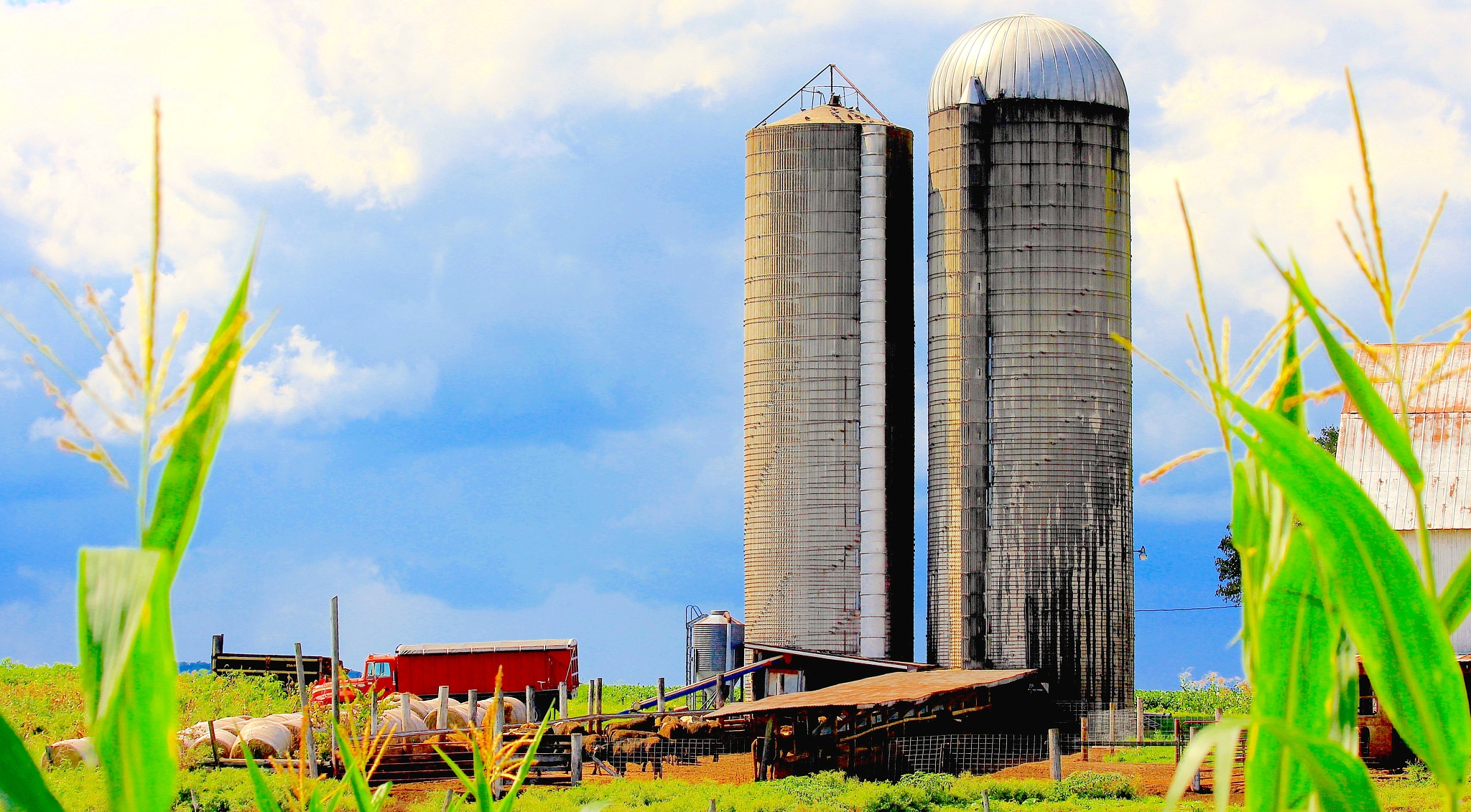 Silos, Above Blue Sky, Clouds Fly. Soon All Will Be Gone. Quit Selling Our Farms! by suzanne.kohr