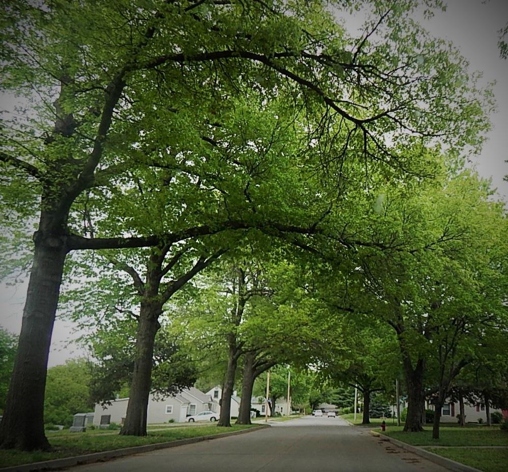 Trees by Marsha Furman