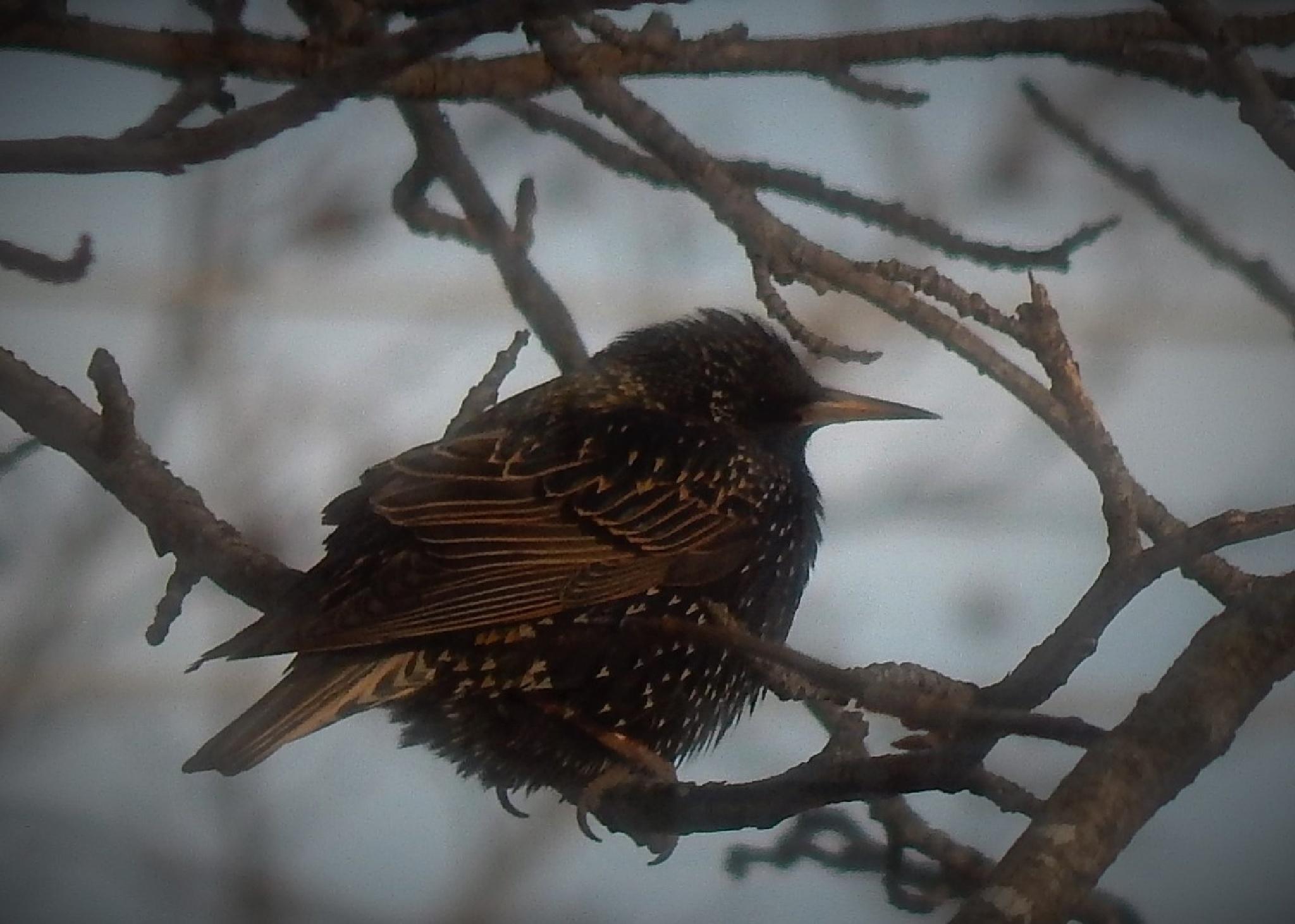 Bird by Marsha Furman