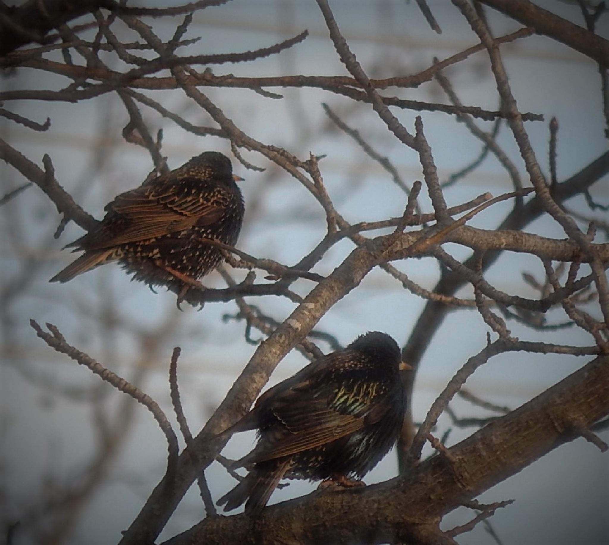 Chillin birds by Marsha Furman