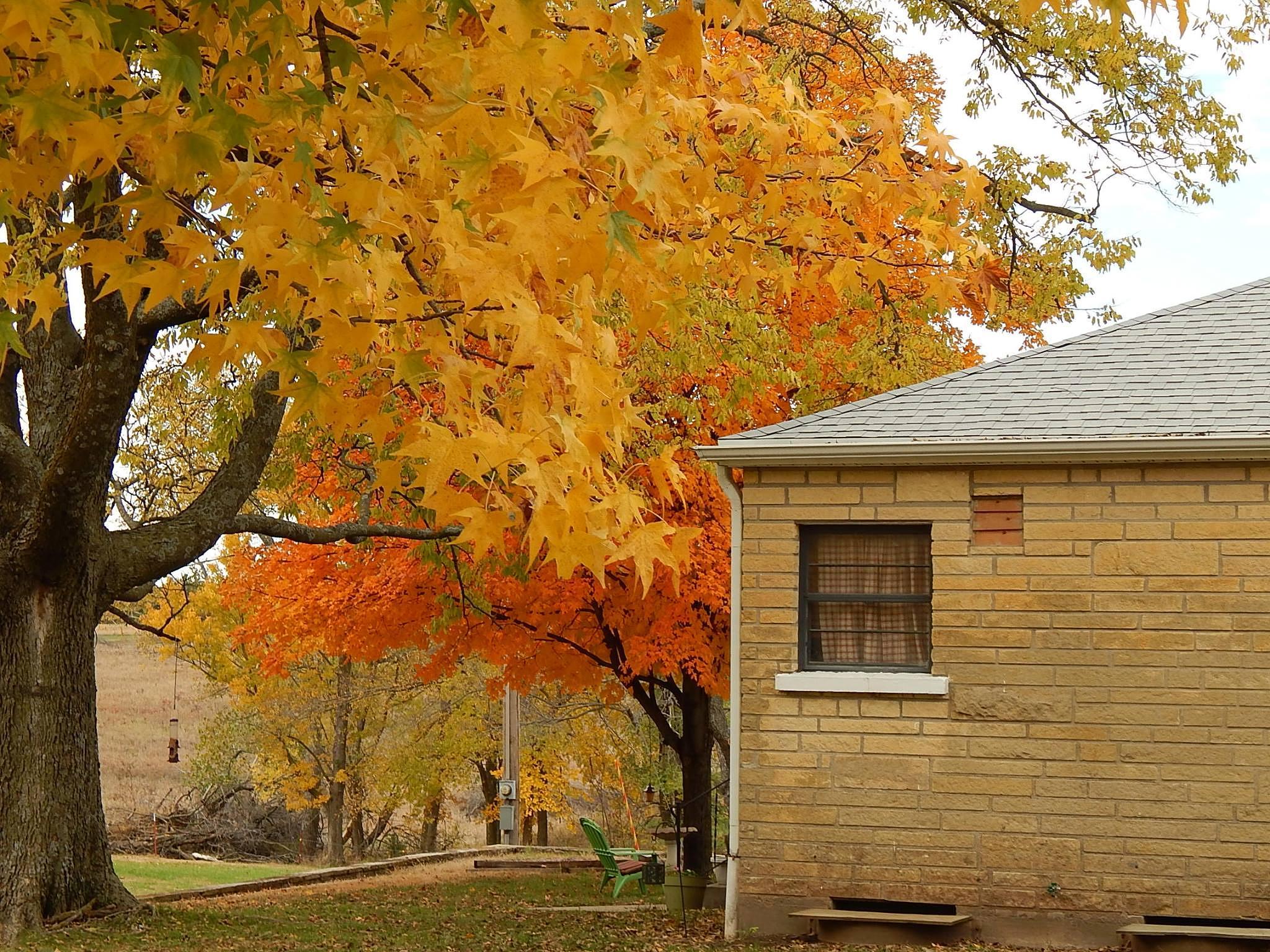 Fall by Marsha Furman