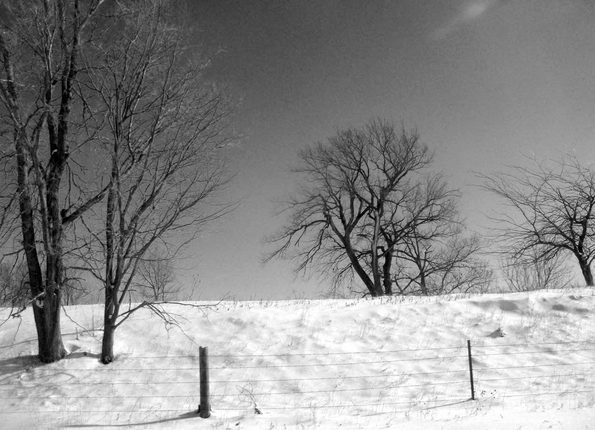 Snow by Marsha Furman