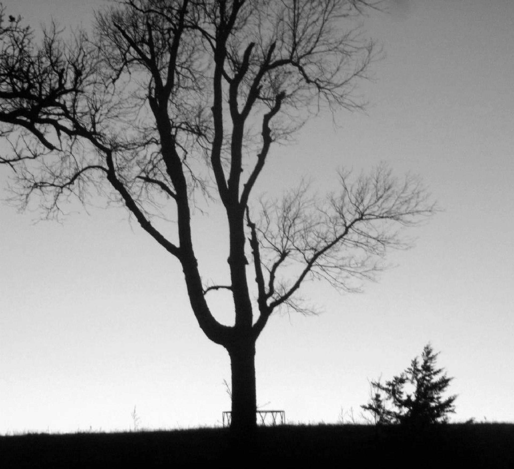 Tree by Marsha Furman