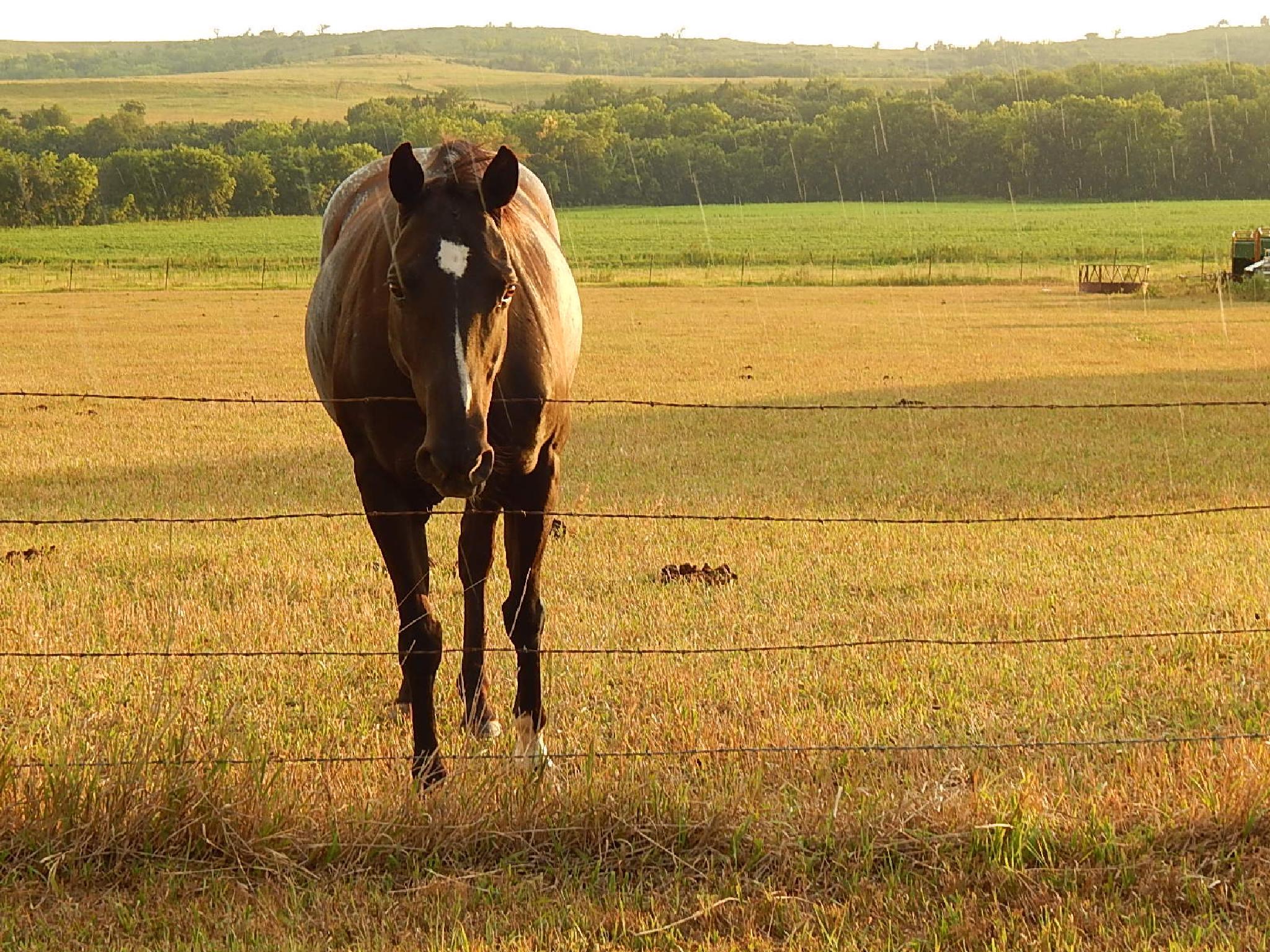 Horse by Marsha Furman