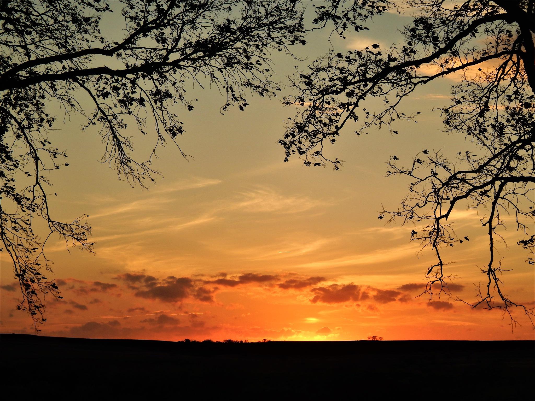 Sunset by Marsha Furman
