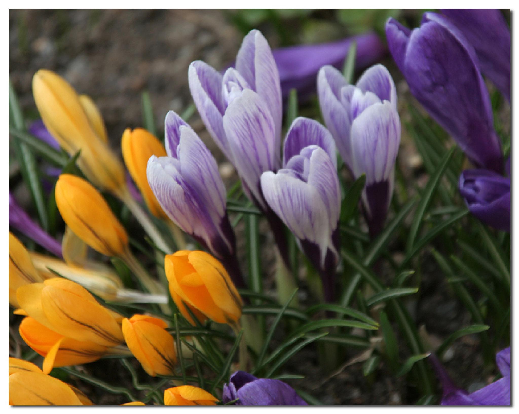 Flowers by embretsen