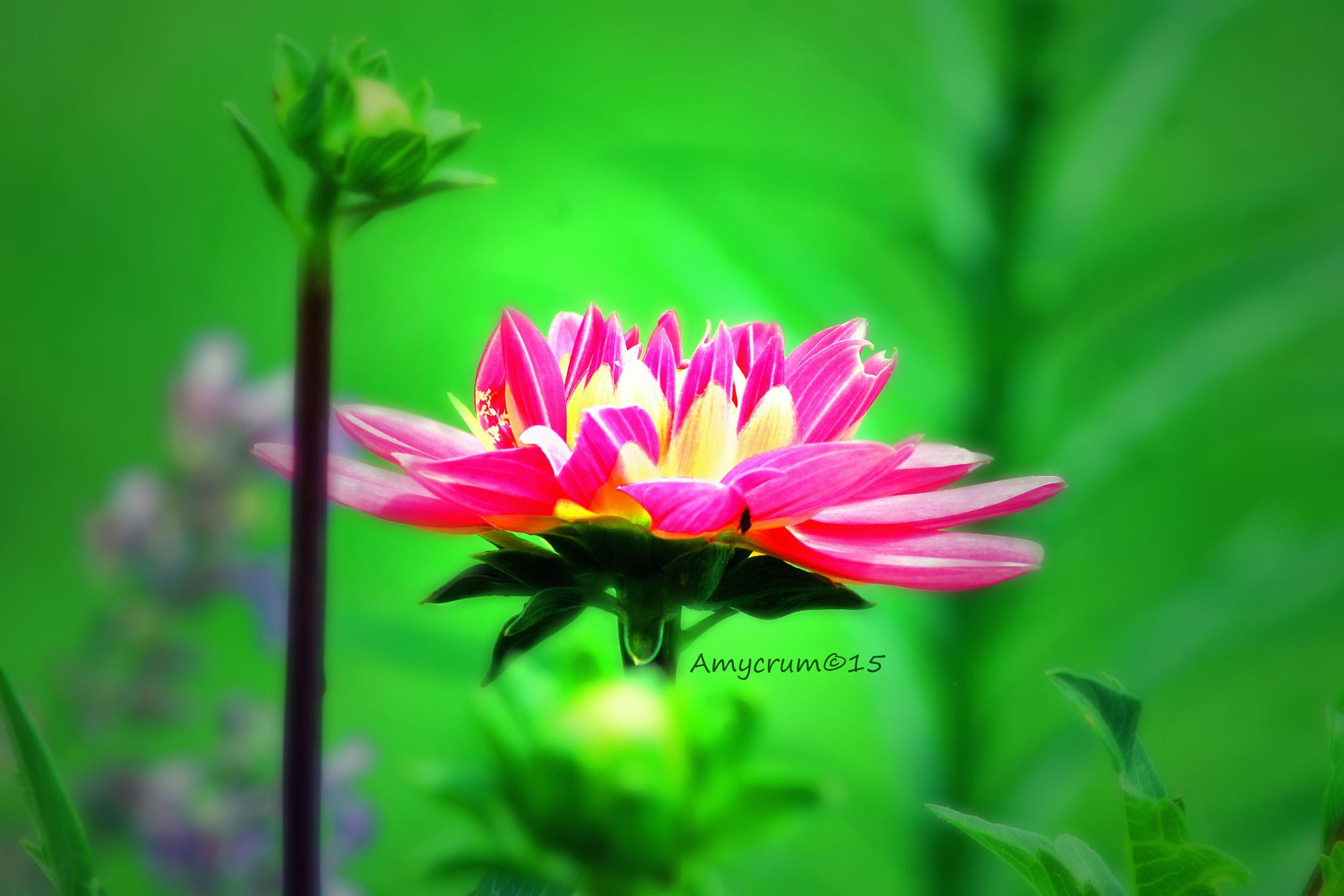 Summer Blooms by A.Crum Image