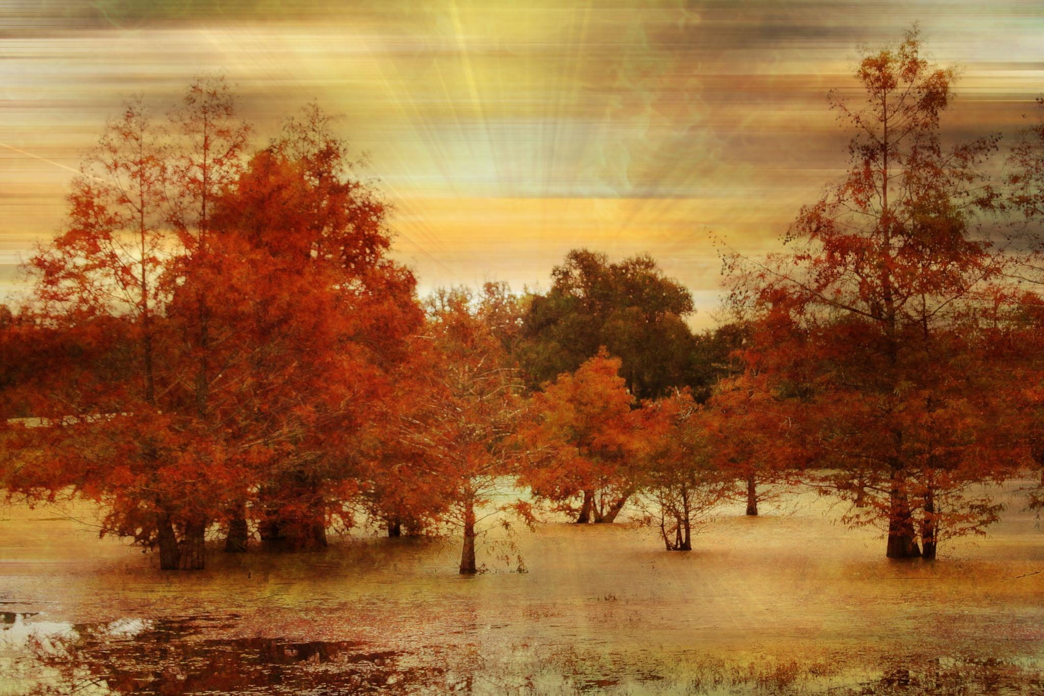 Cypress Swamp In Autumn by ginger.barritt