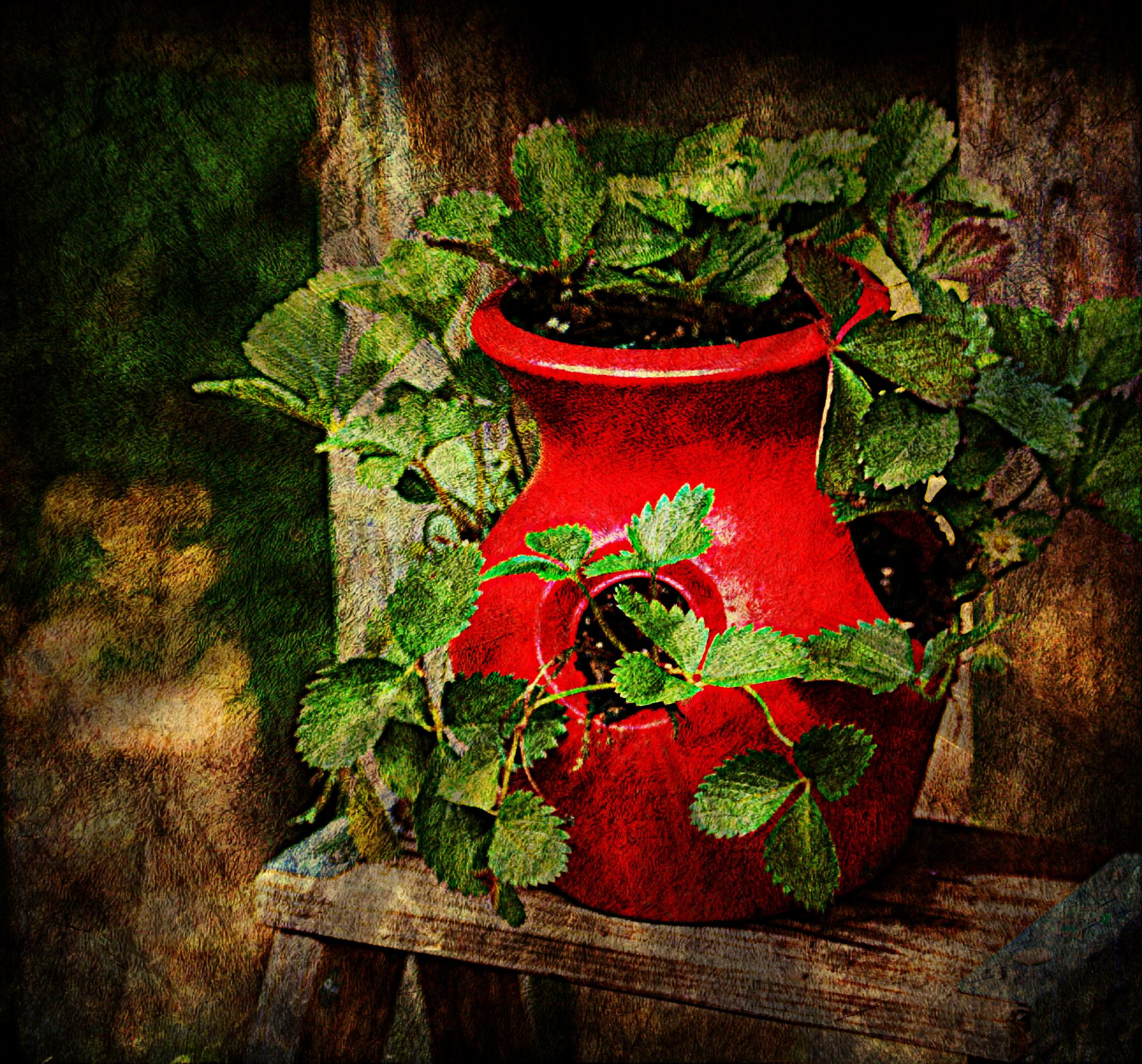 Strawberry Pot by ginger.barritt
