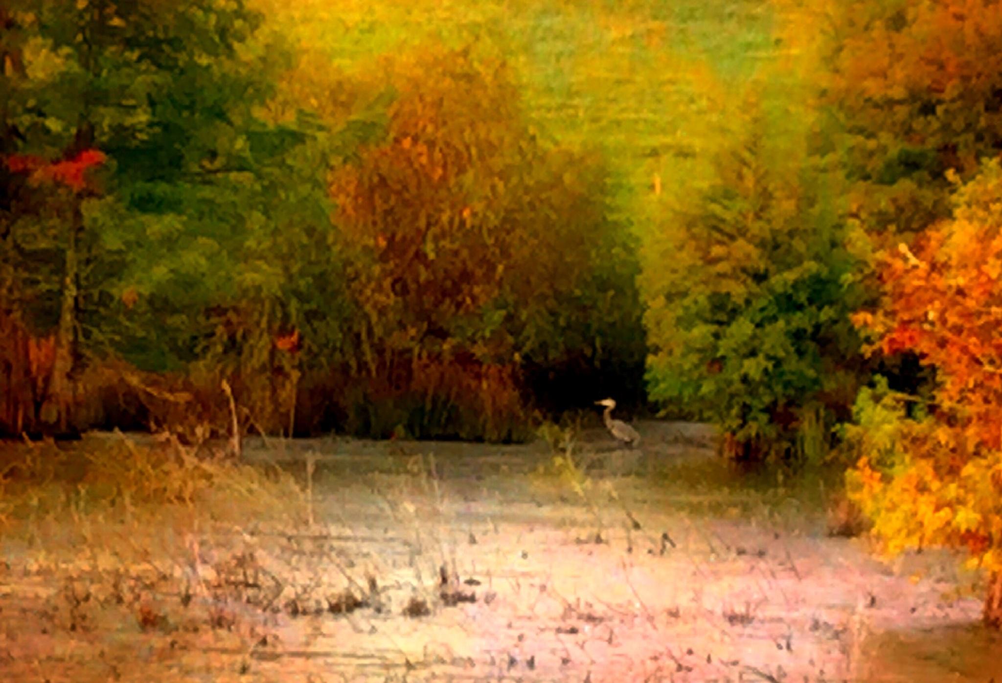 Cypress Swamp by ginger.barritt