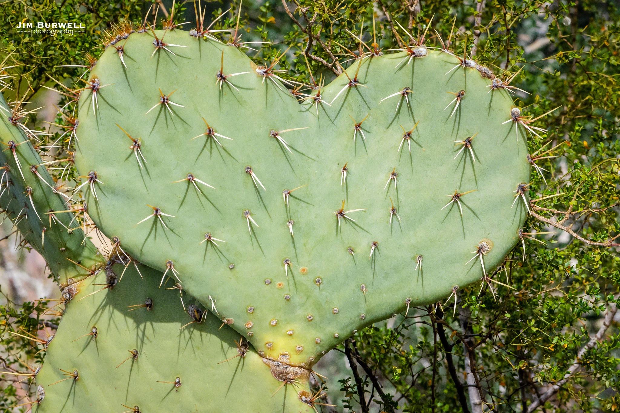 Happy Valentines Day from Arizona !!! by Jim Burwell Photography