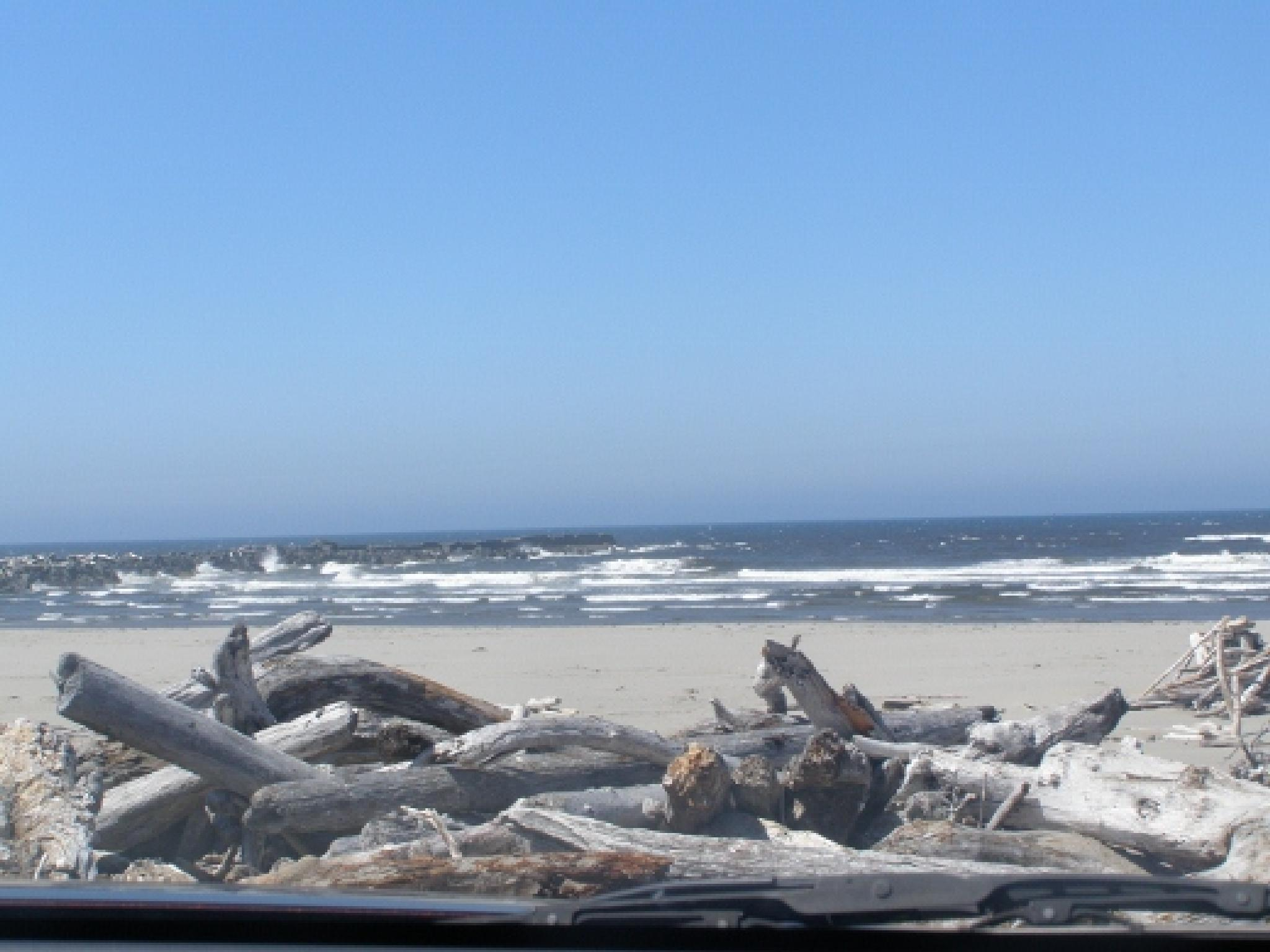 Seaside and Driftwood by Daggerbones