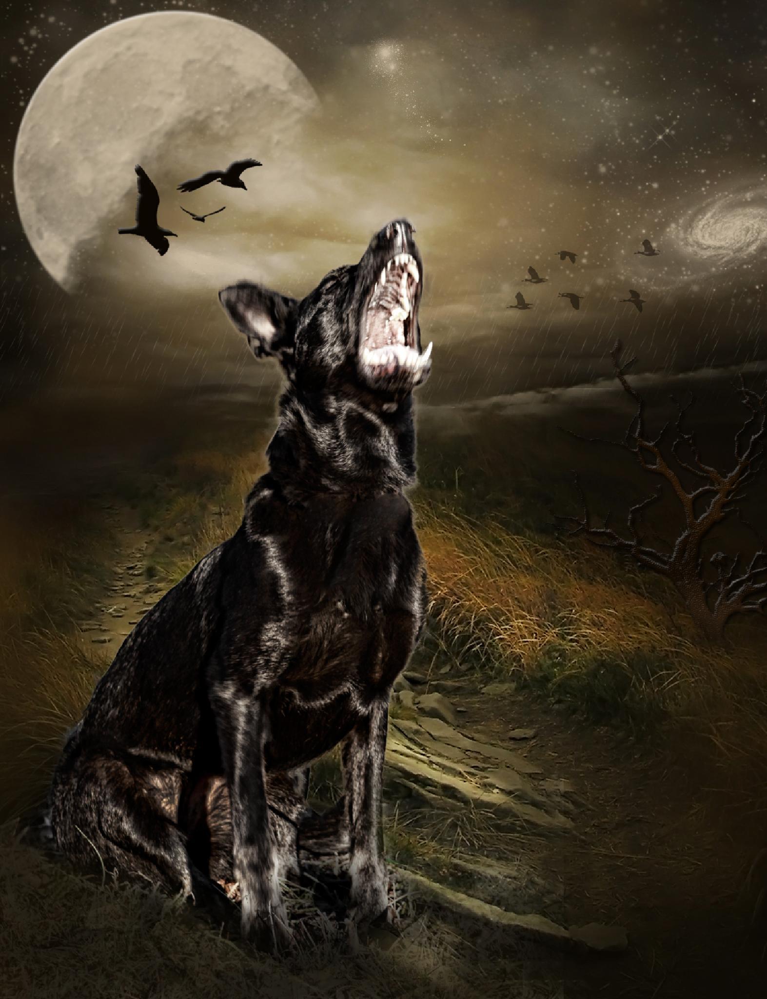 German Shepherd Fantasy by lori.monroe.50