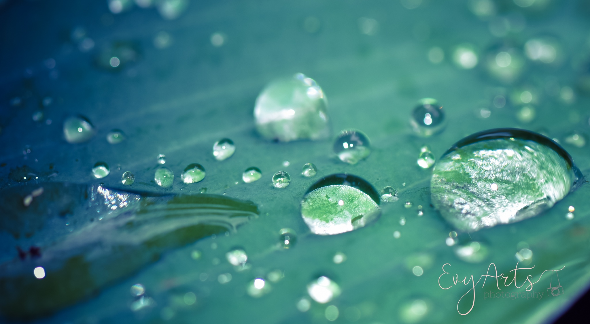 Photo in Random #water #nature #leaves #dew