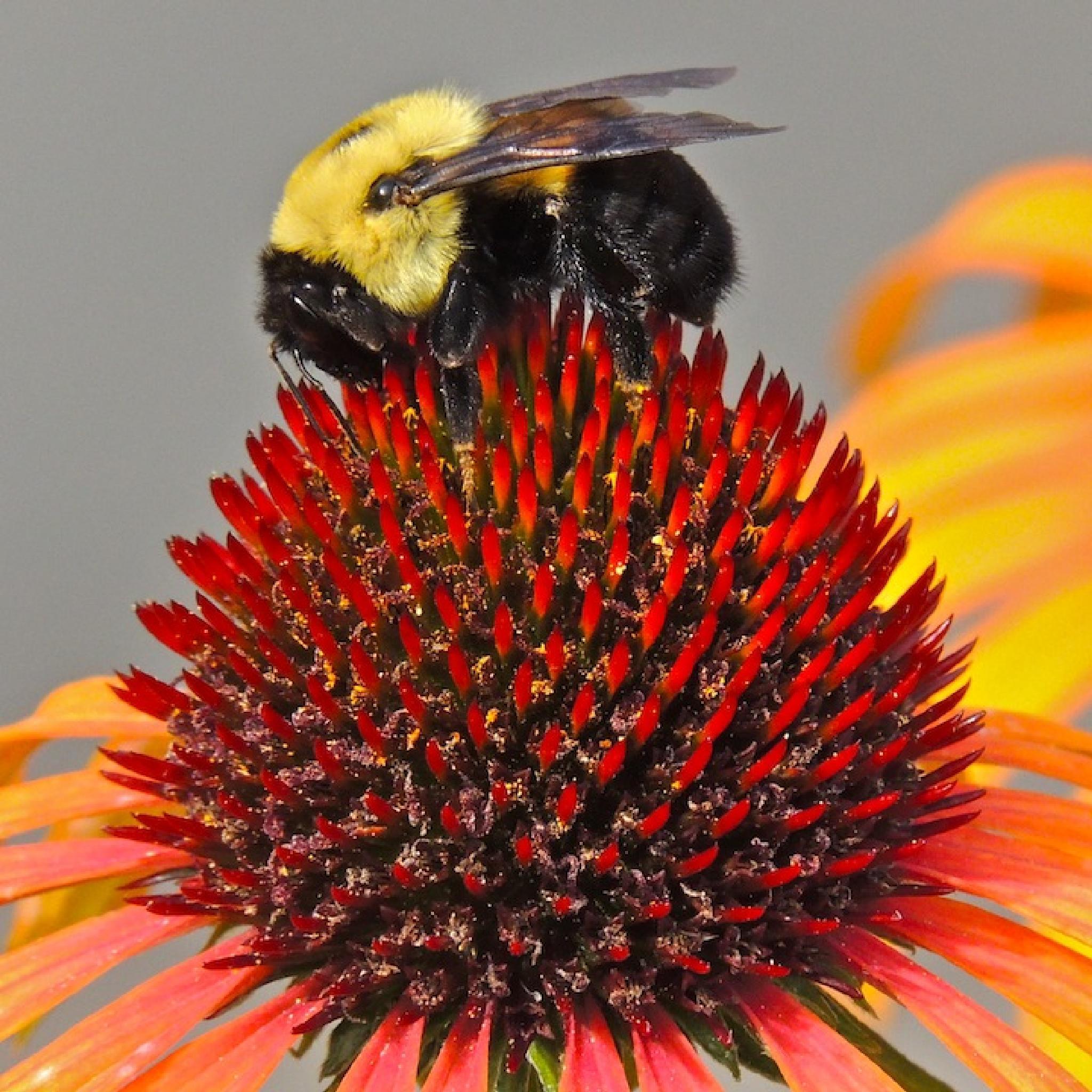 Queen Bee by Eve