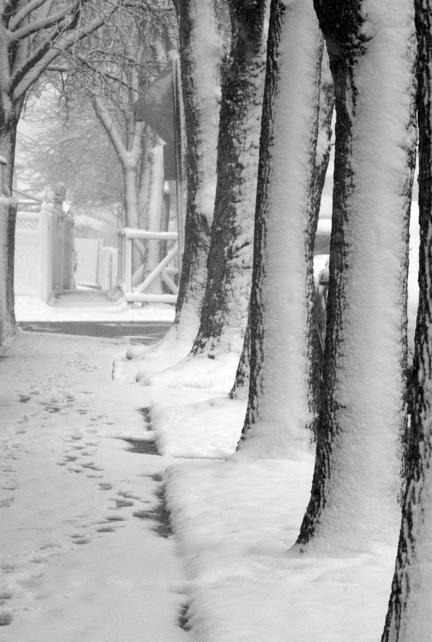 Snow blown by photoroe