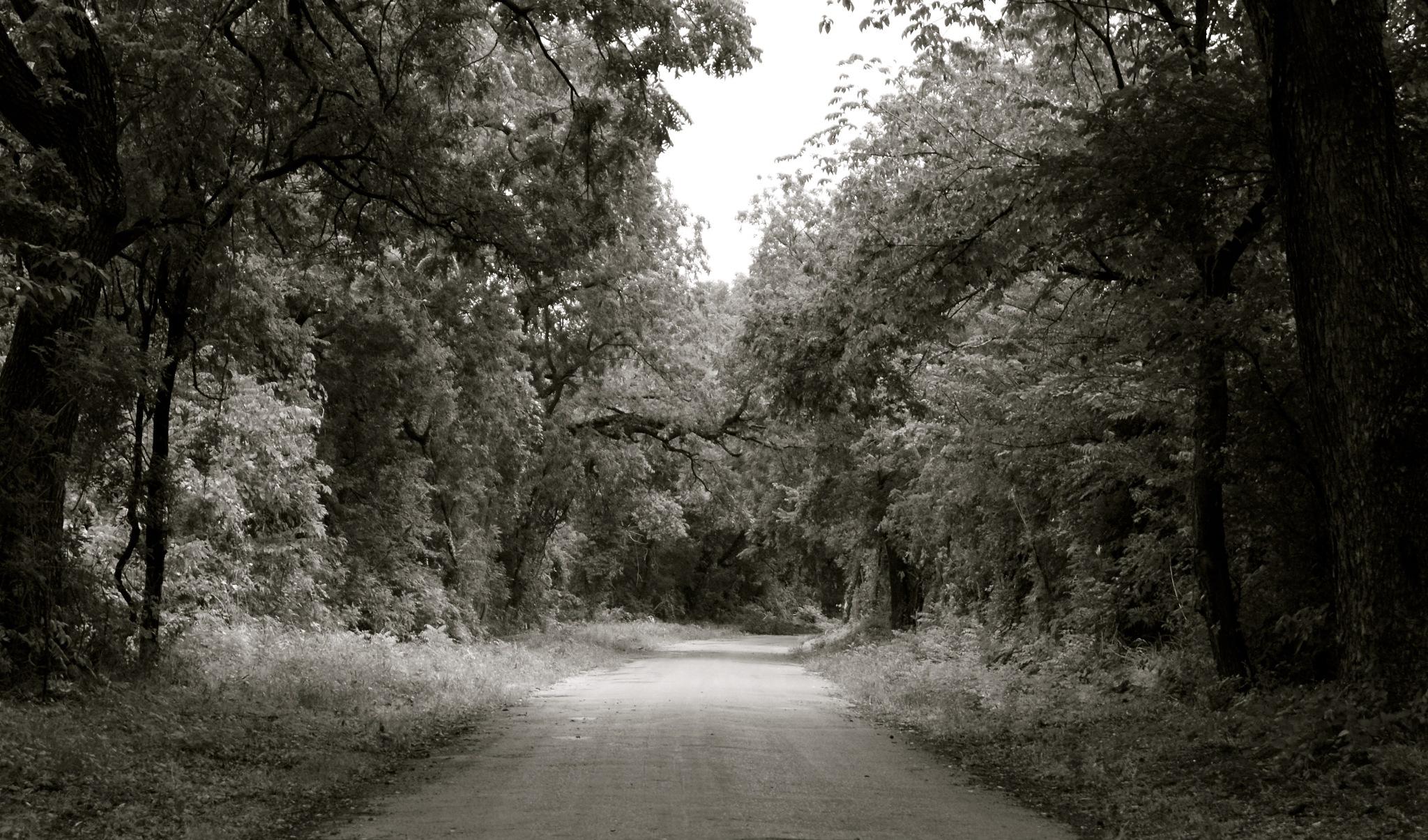Long Walk Home by photoroe