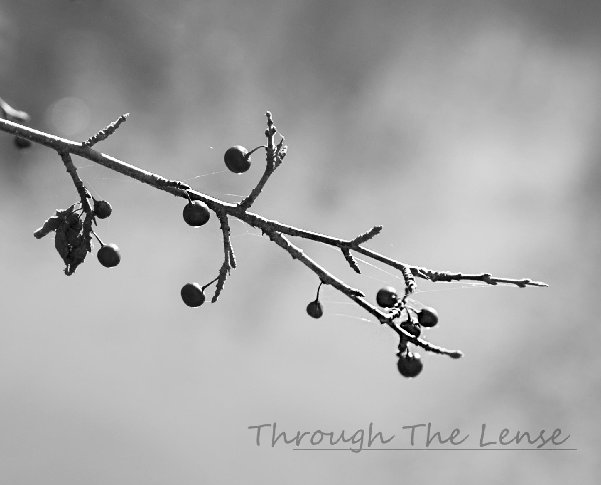 Berries in B&W by Throughthelense