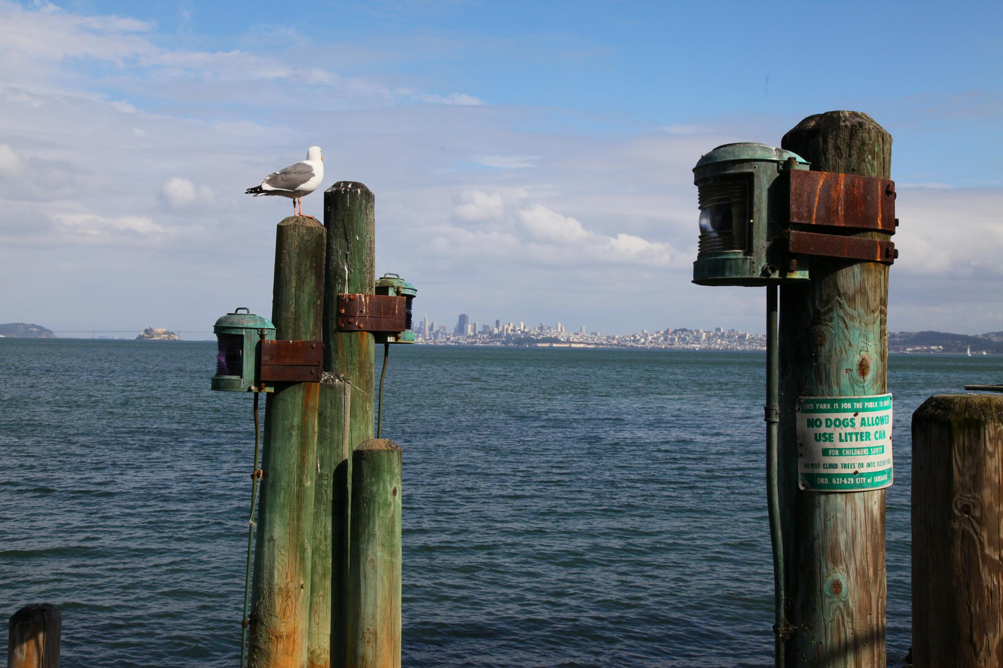 San Francisco Seagull by Anders Jonsson