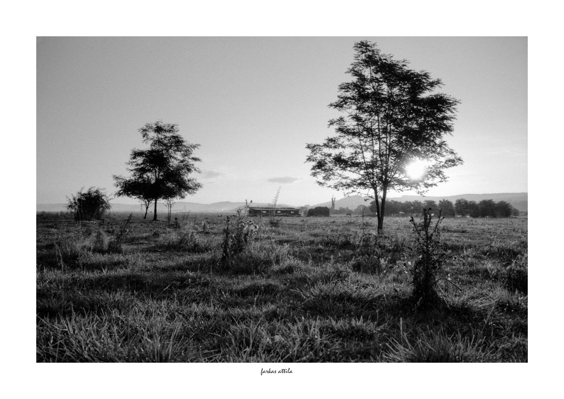 Morning... by Attila Farkas