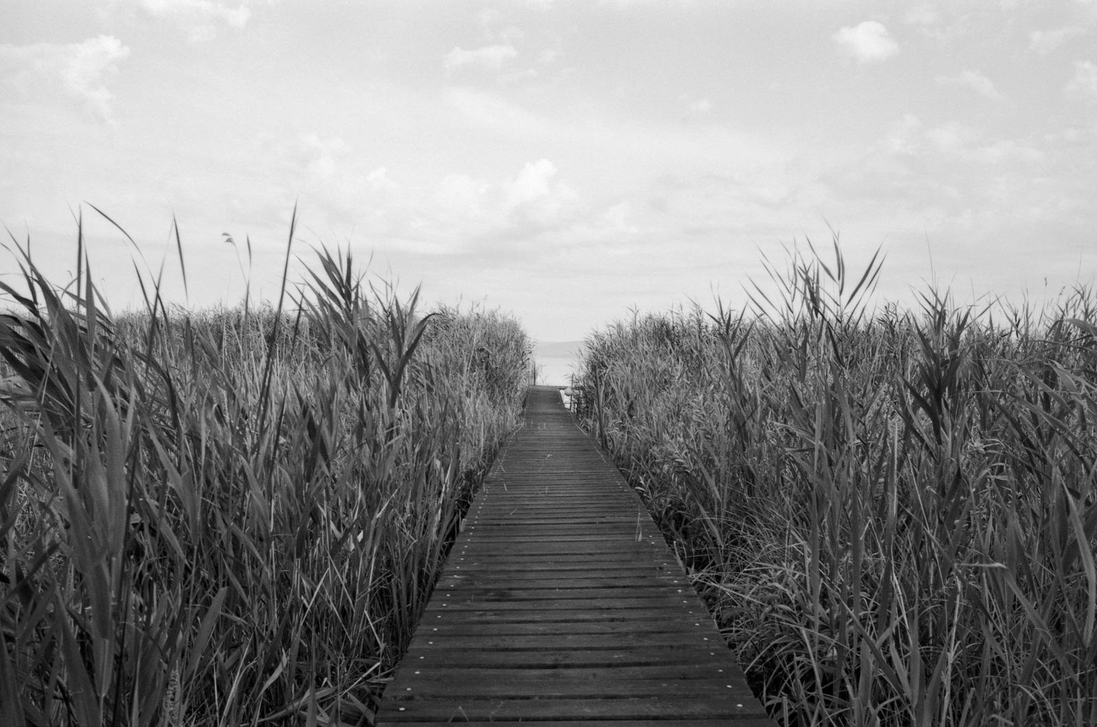 The end of the path... by Attila Farkas