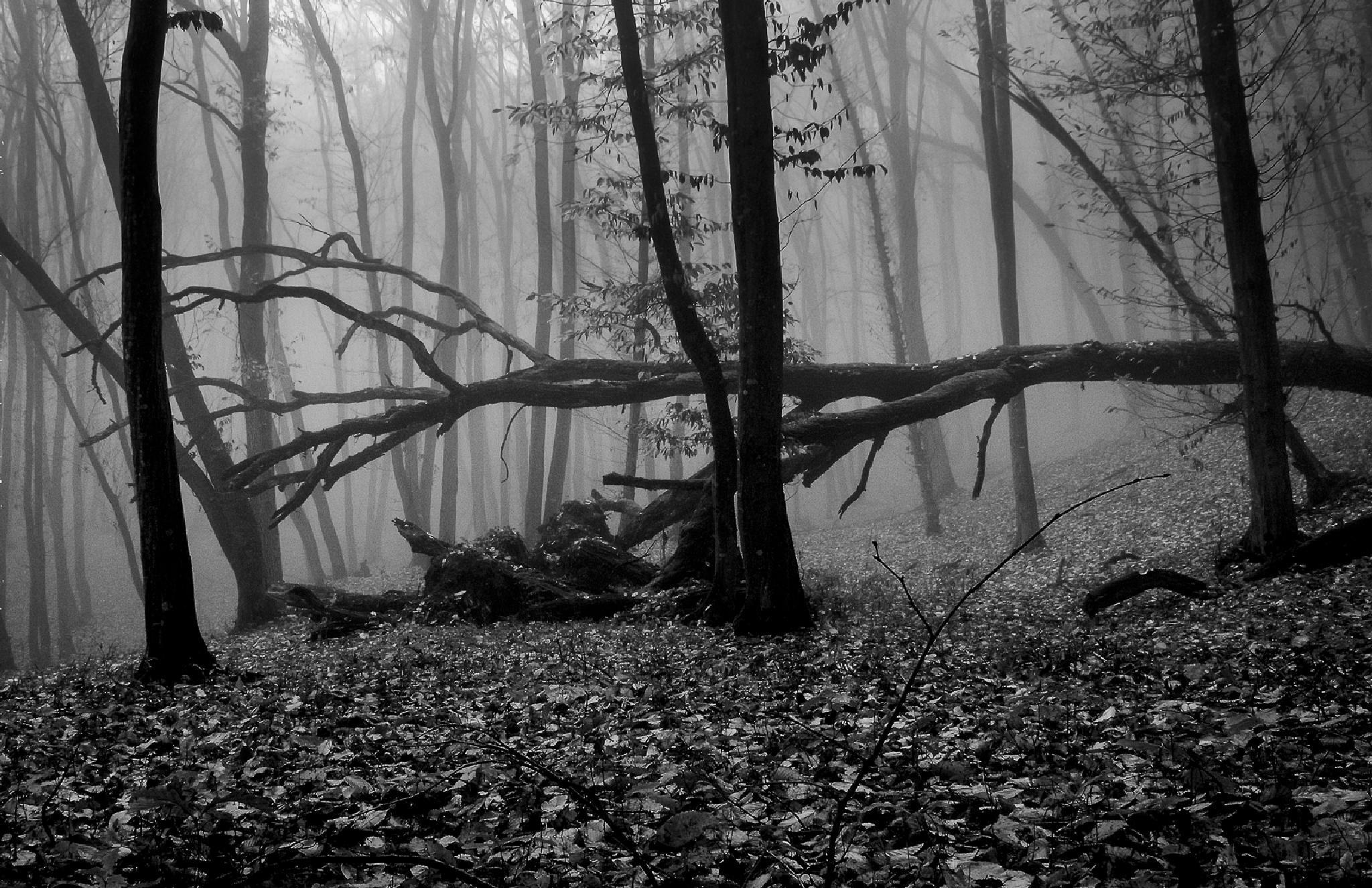 November forest by Attila Farkas