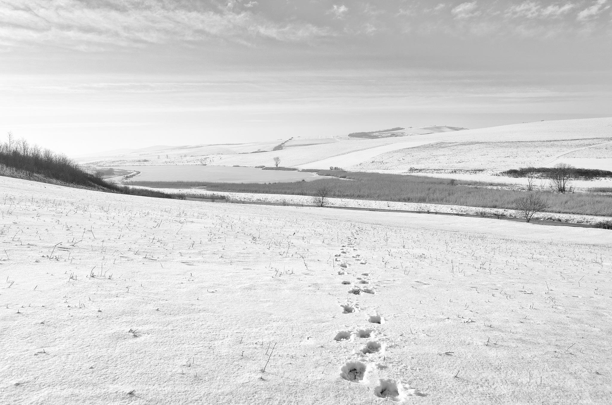 On the trail... by Attila Farkas