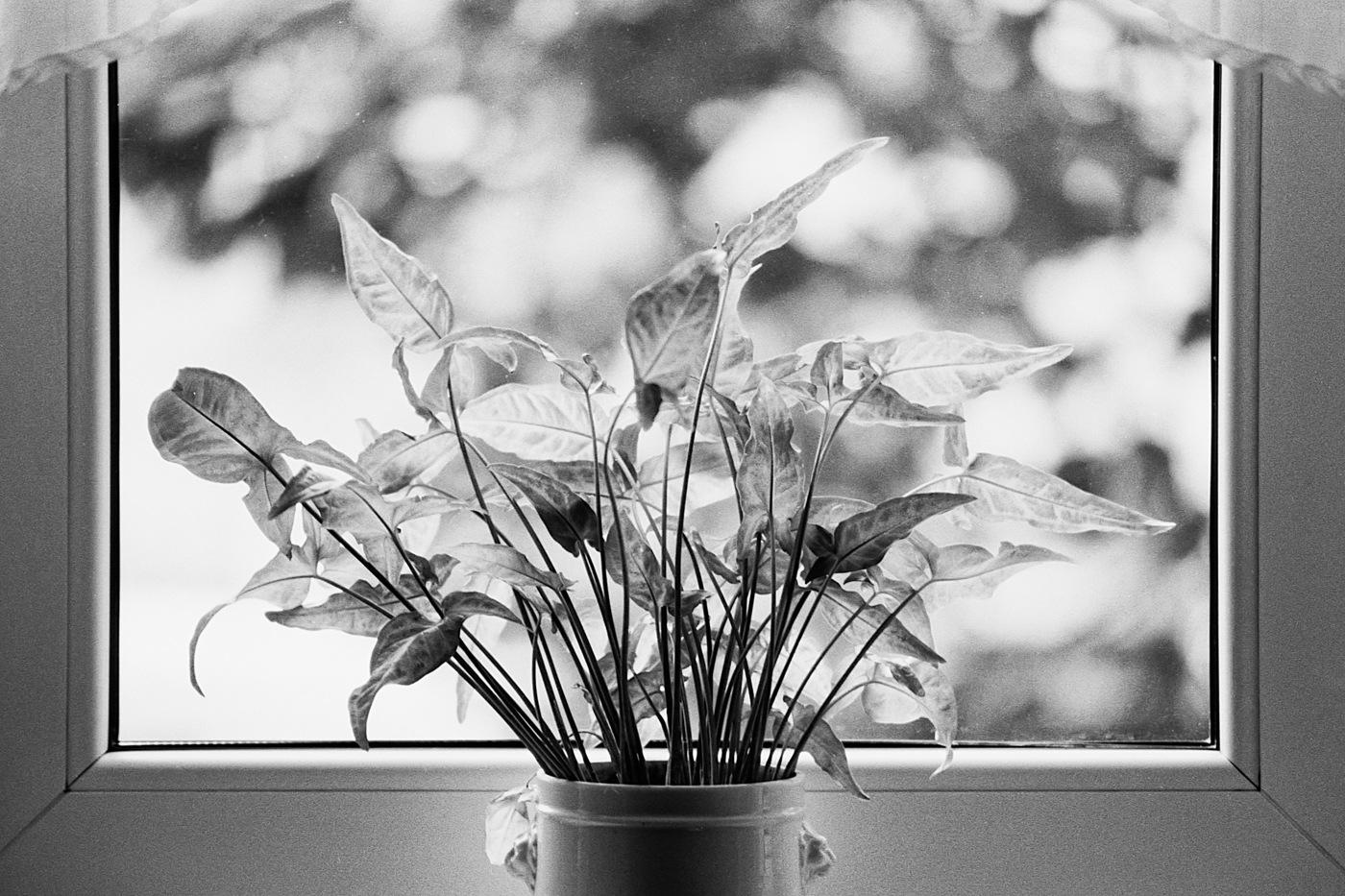 Window... by Attila Farkas