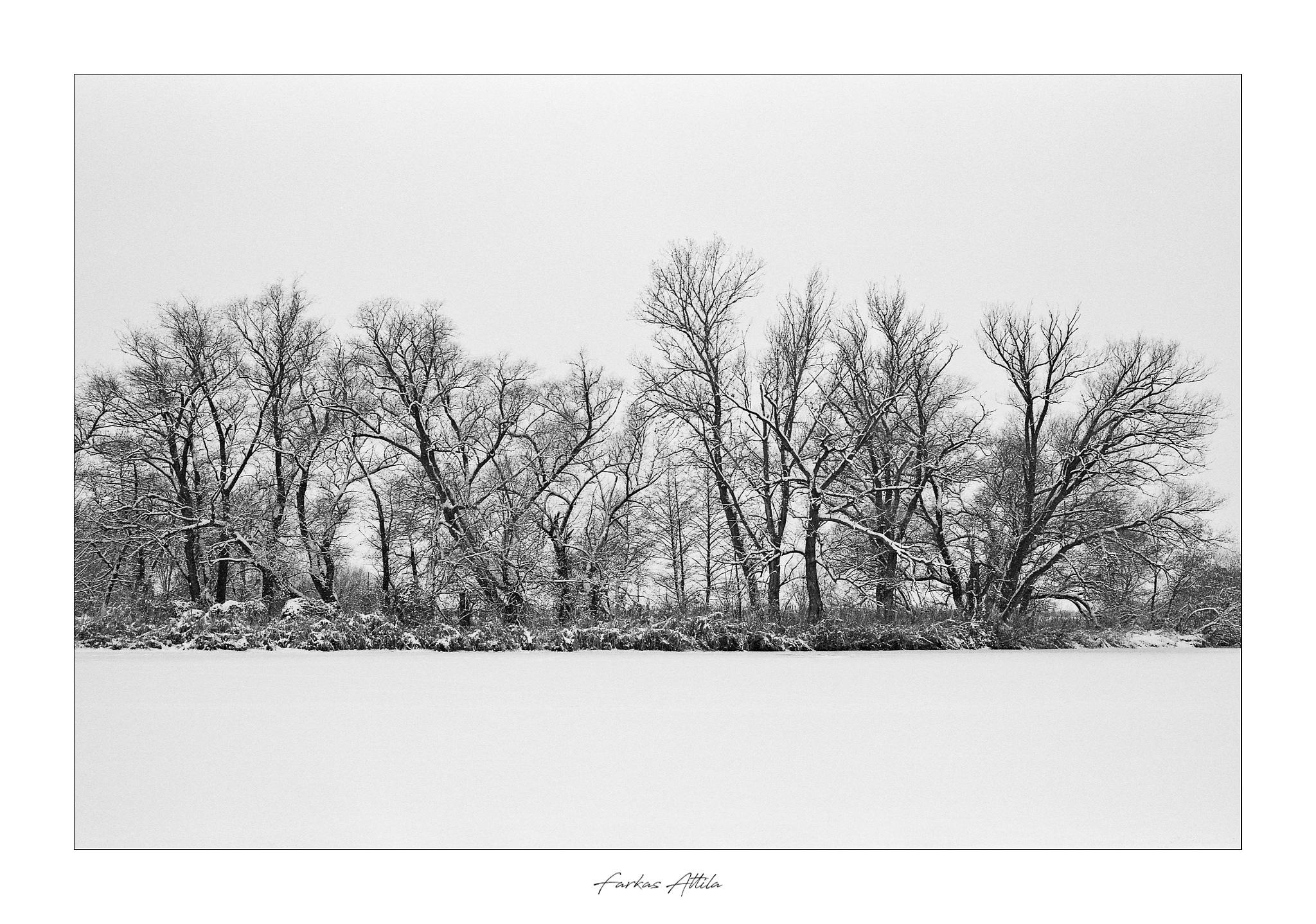 Photo in Landscape #river #winter #trees #tree #snow #white #black and white #snowy #cold #ice #frozen #nature #natural #landscape #landscapes #monochrome #transylvania #romania #film #analog #ilford fp4+ #fp4+ #nikon fe