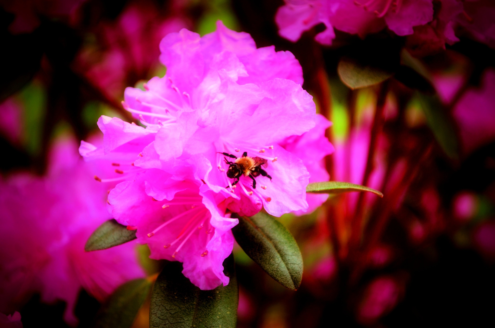 Spring Flowers by VBPhotography2013