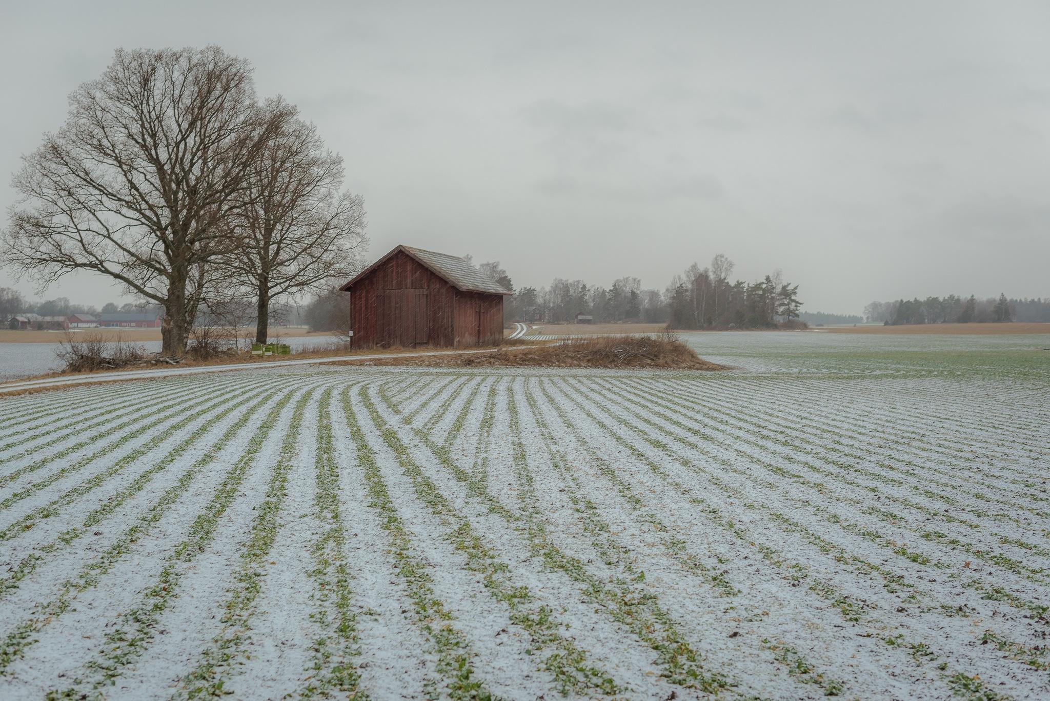 Sown with precision by Fotojocke