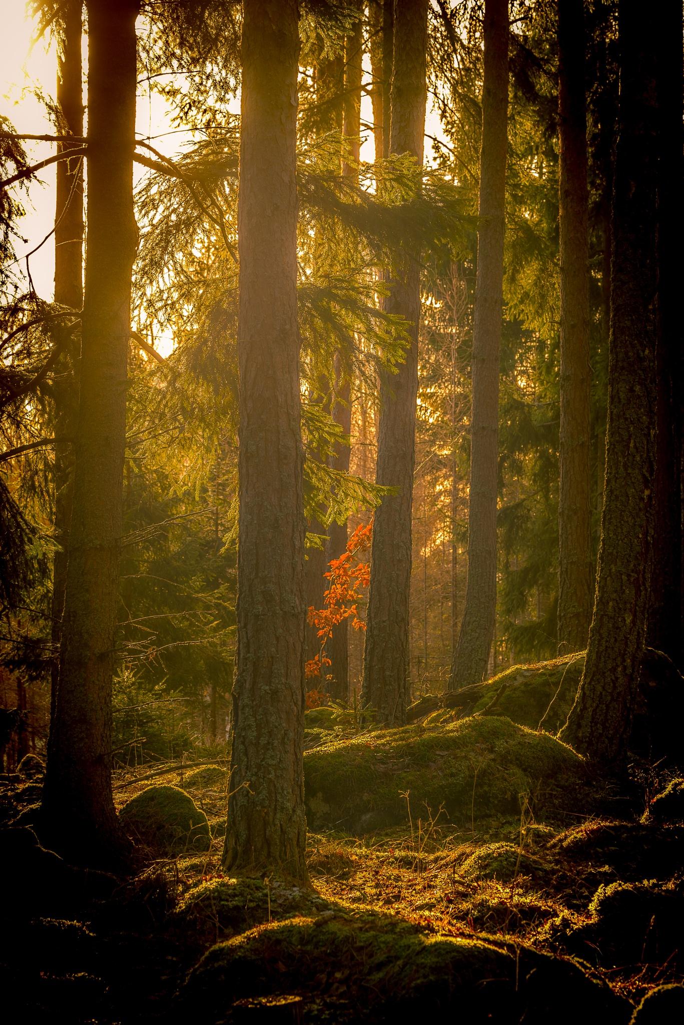 A little corner of the forest ... by Fotojocke