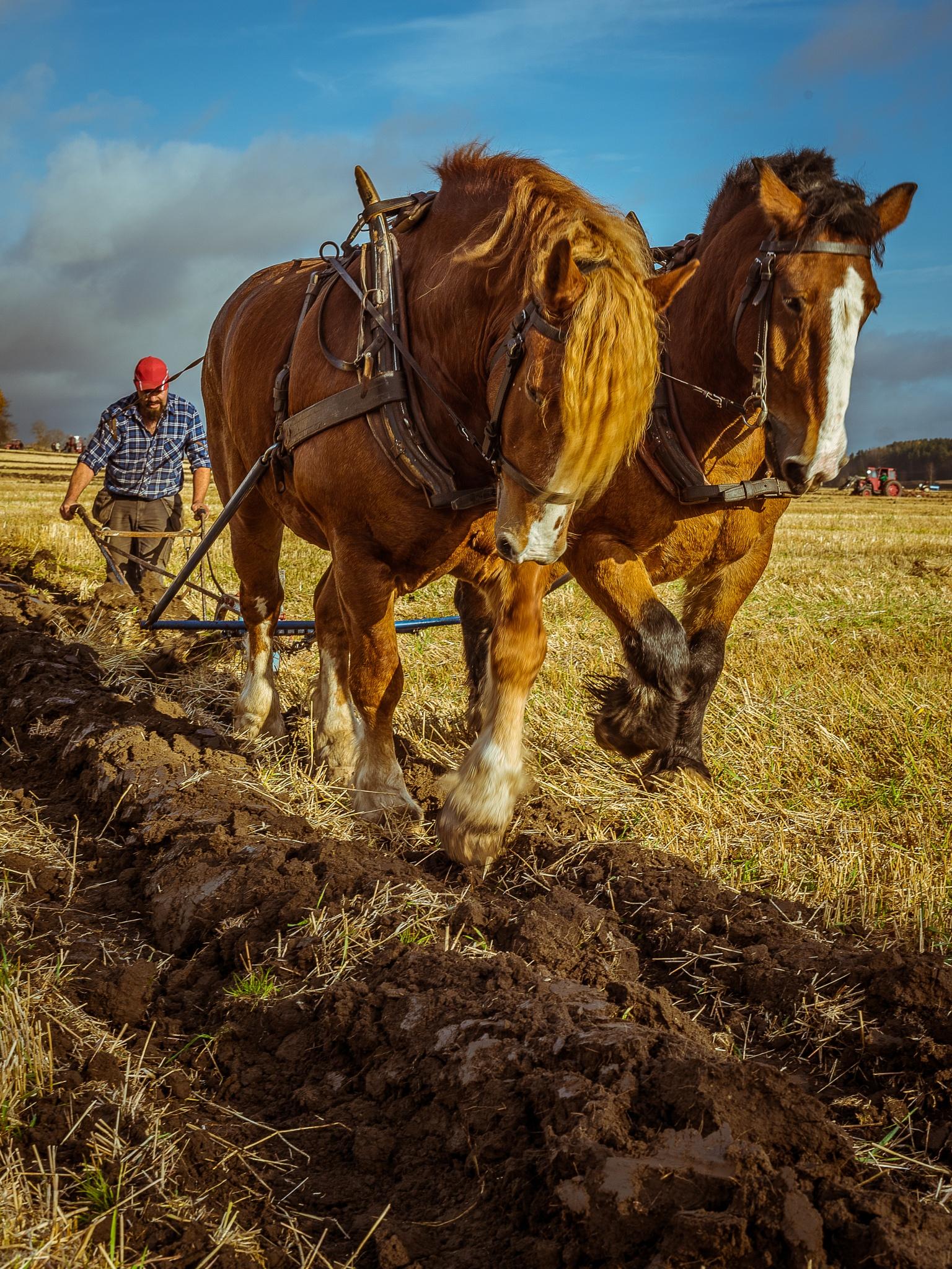 The art of turning soil by Fotojocke