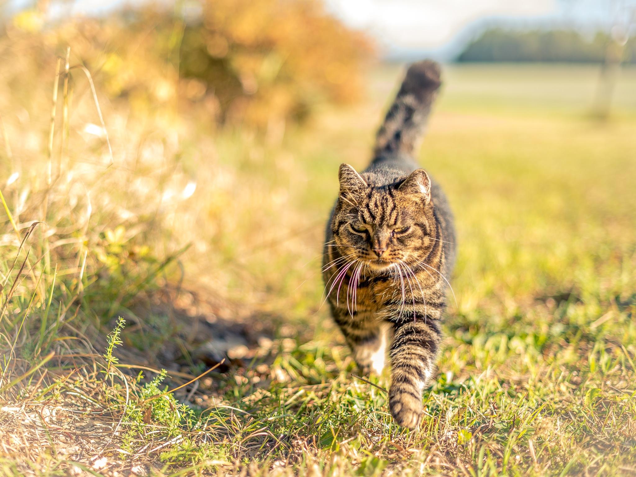 Catwalk... by Fotojocke
