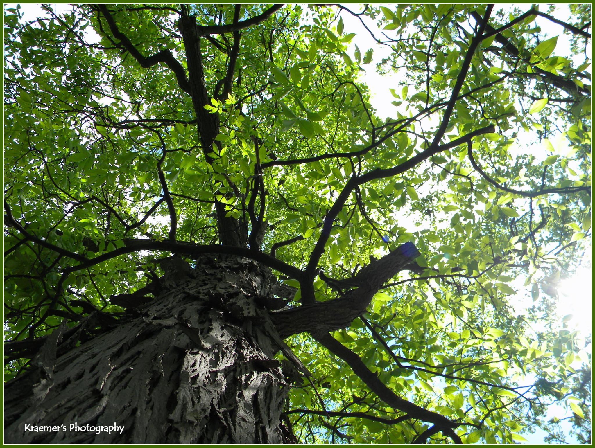 Up a Tree by Trish Kraemer