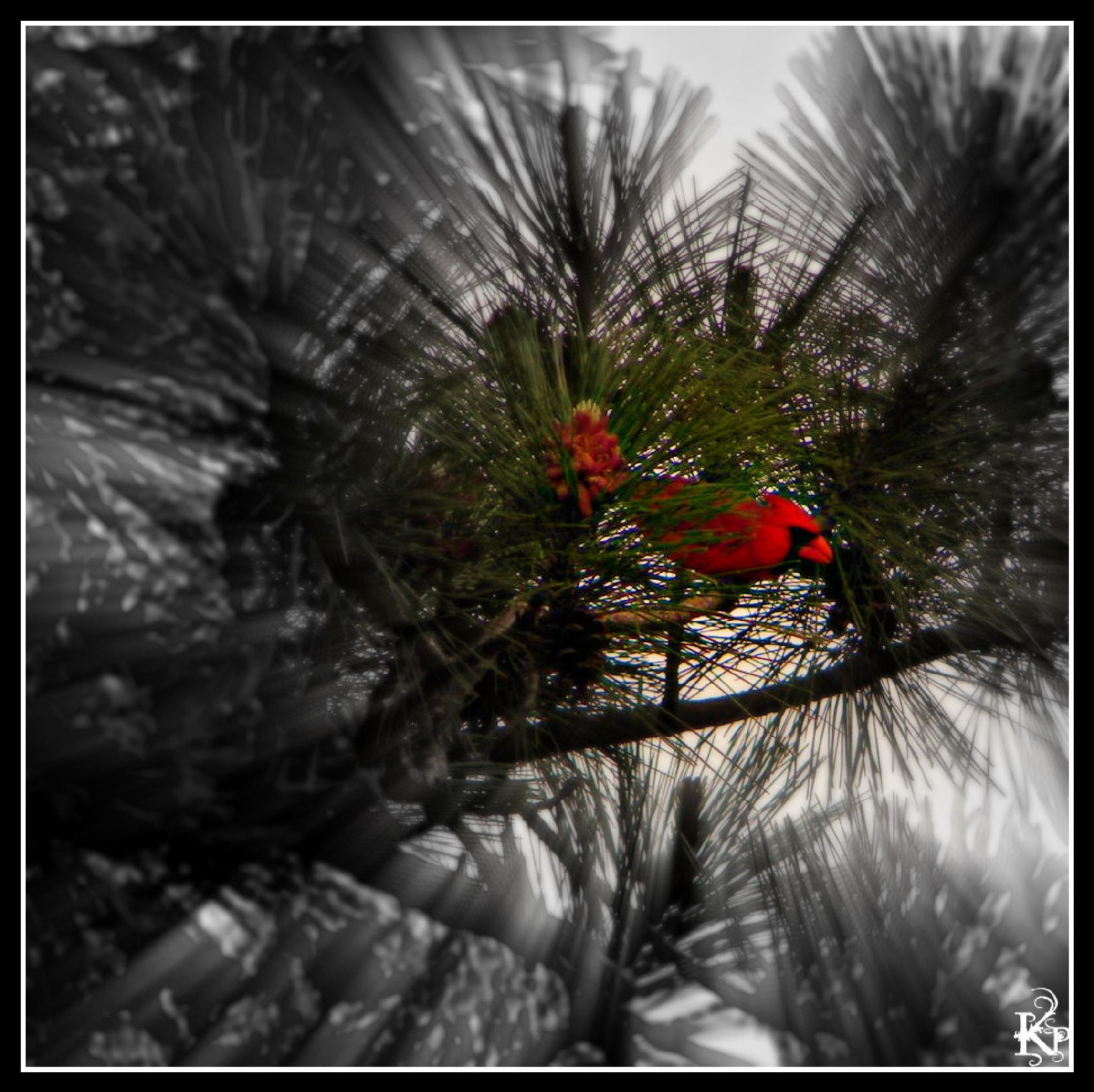 Camo Red by Trish Kraemer