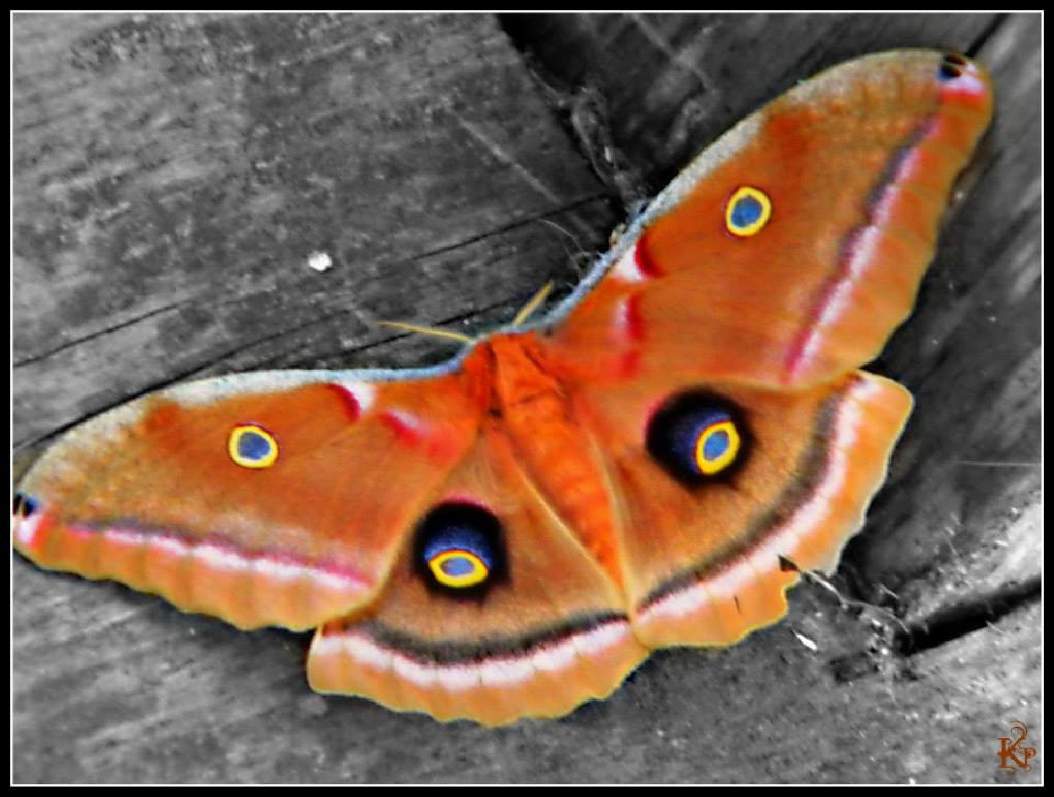 Moth by Trish Kraemer
