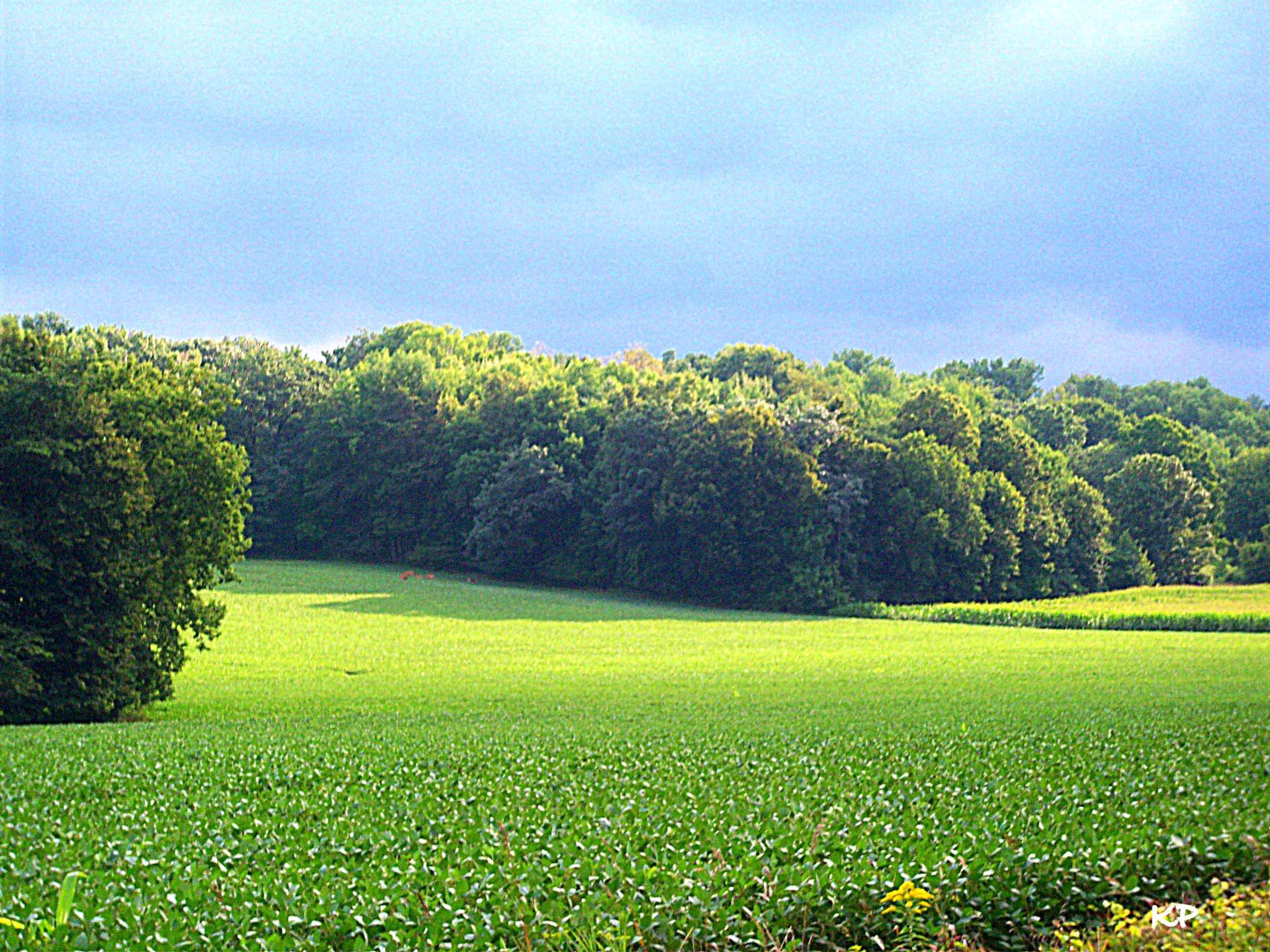 Wisconsin Farm Land by Trish Kraemer