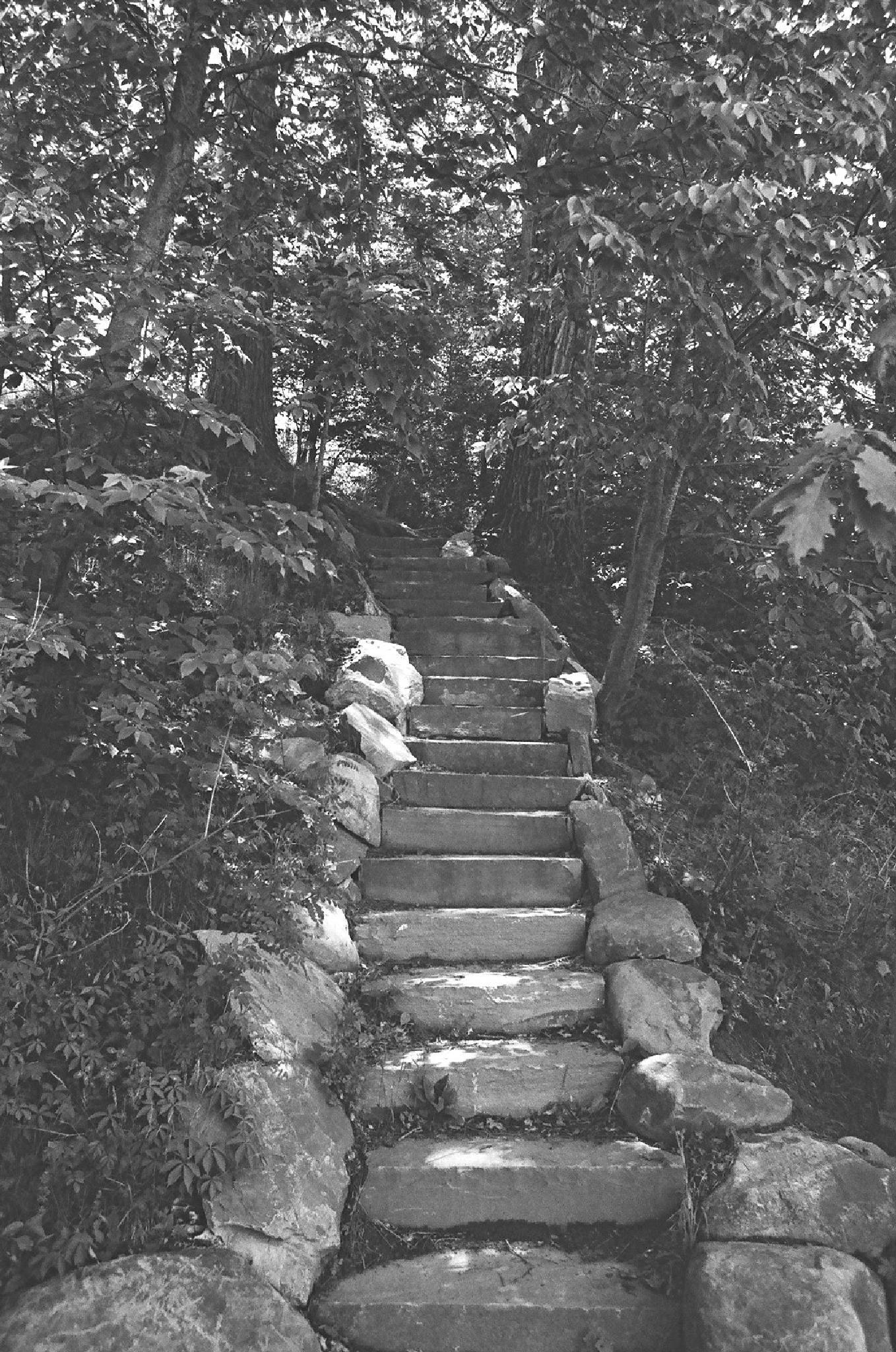 Pathway by Fog_Battleship_Amagi