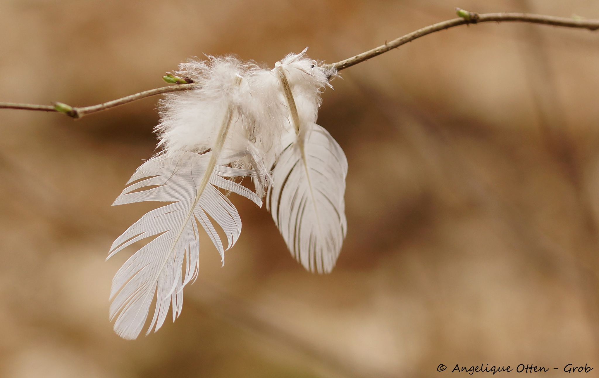 Feathers by Angelique Otten - Grob