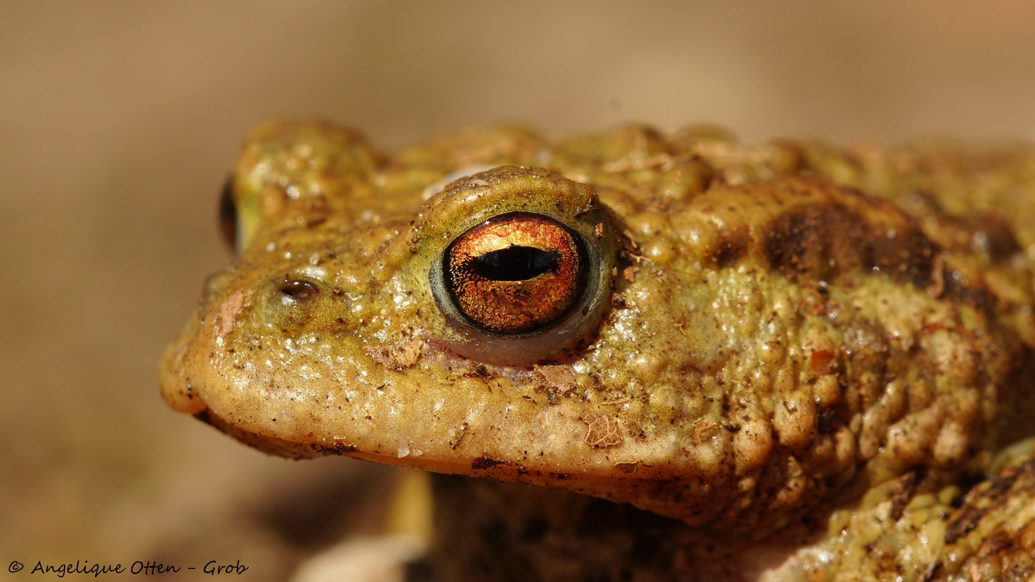 Look into my eye.. by Angelique Otten - Grob