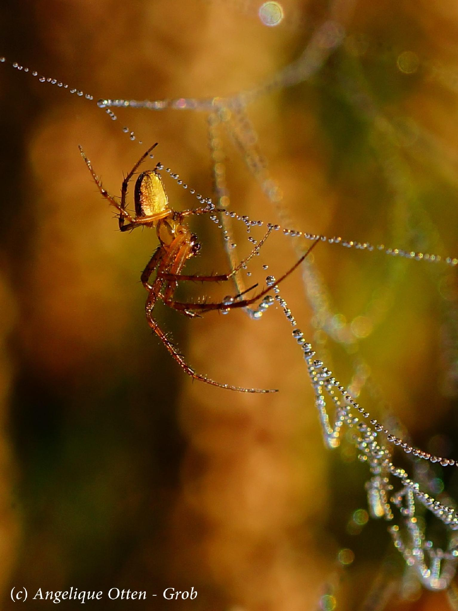 Spider in the web by Angelique Otten - Grob