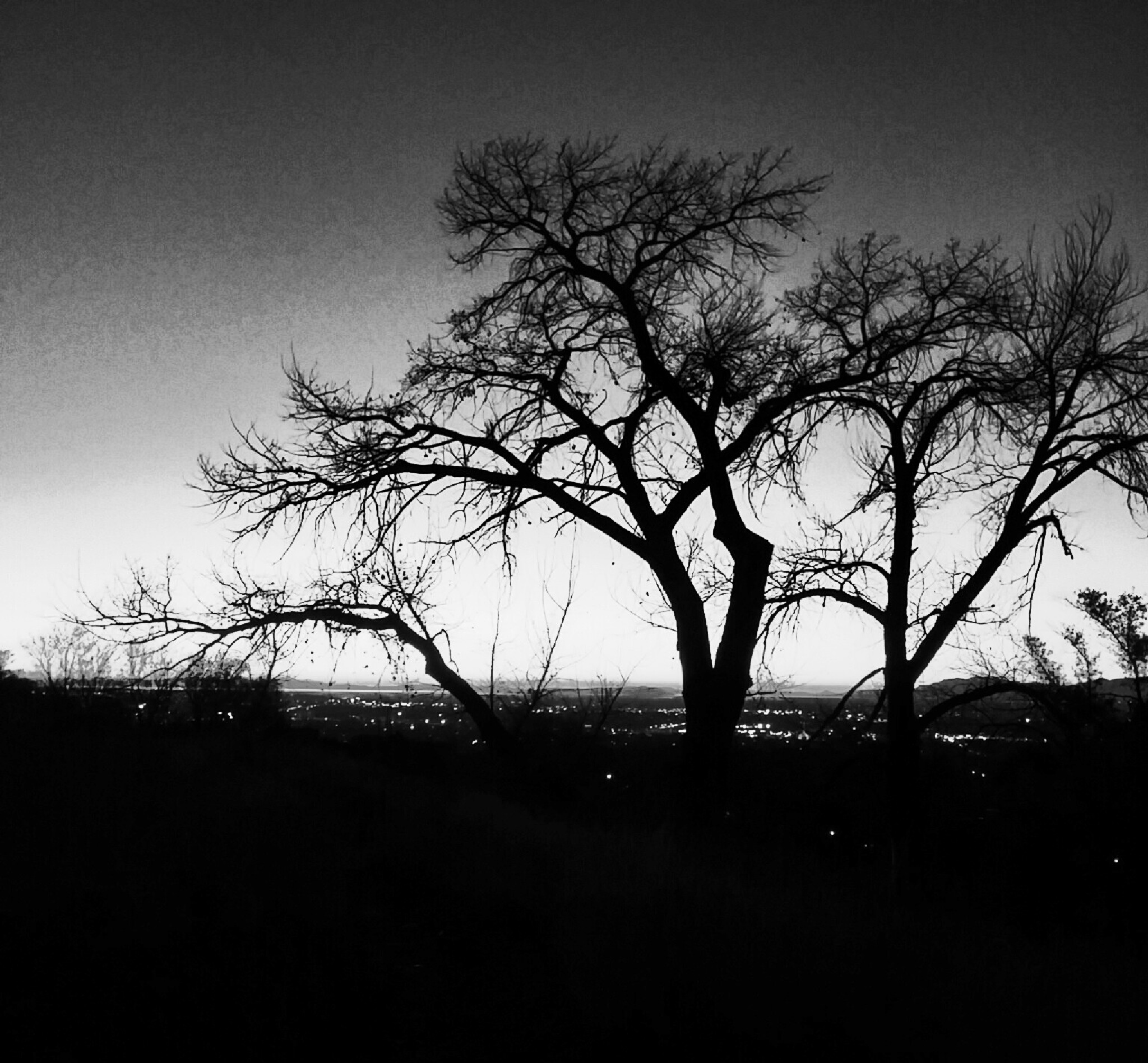 Tree in the sunset by Jim Beitz