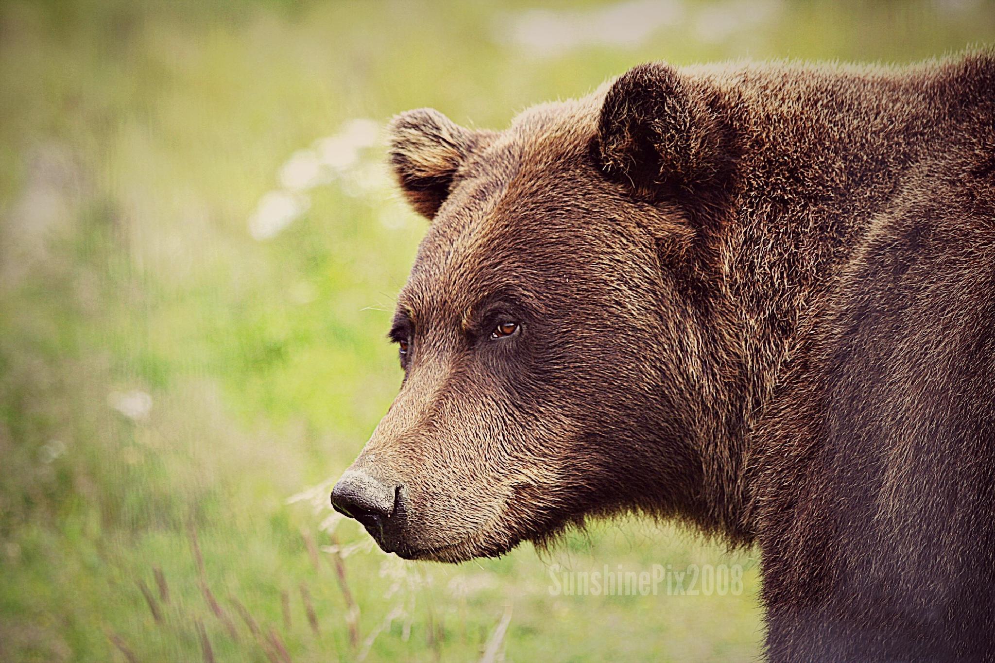 teddy bear by DianaV
